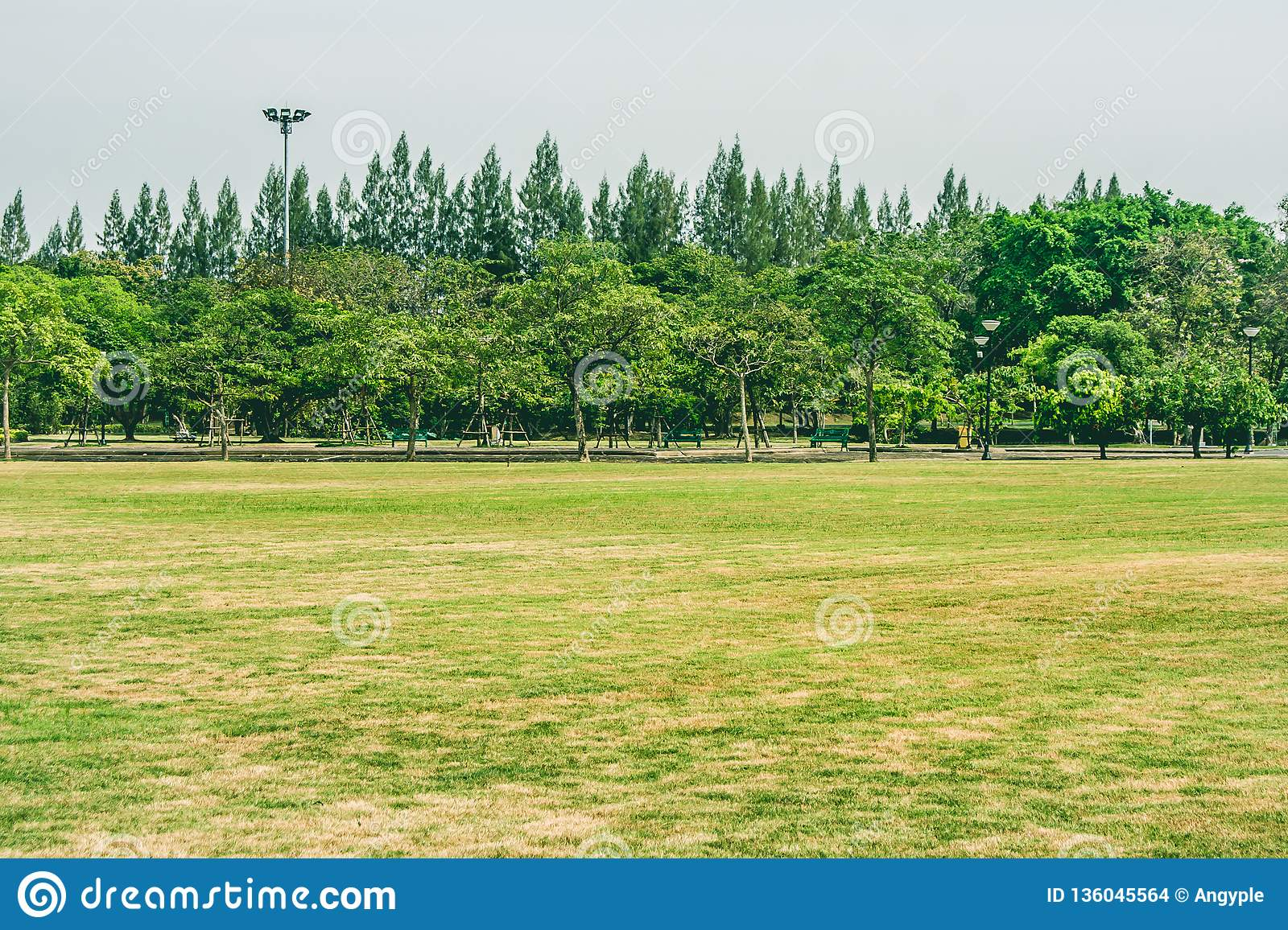 View of green grass meadow field in public park with green trees in the background.