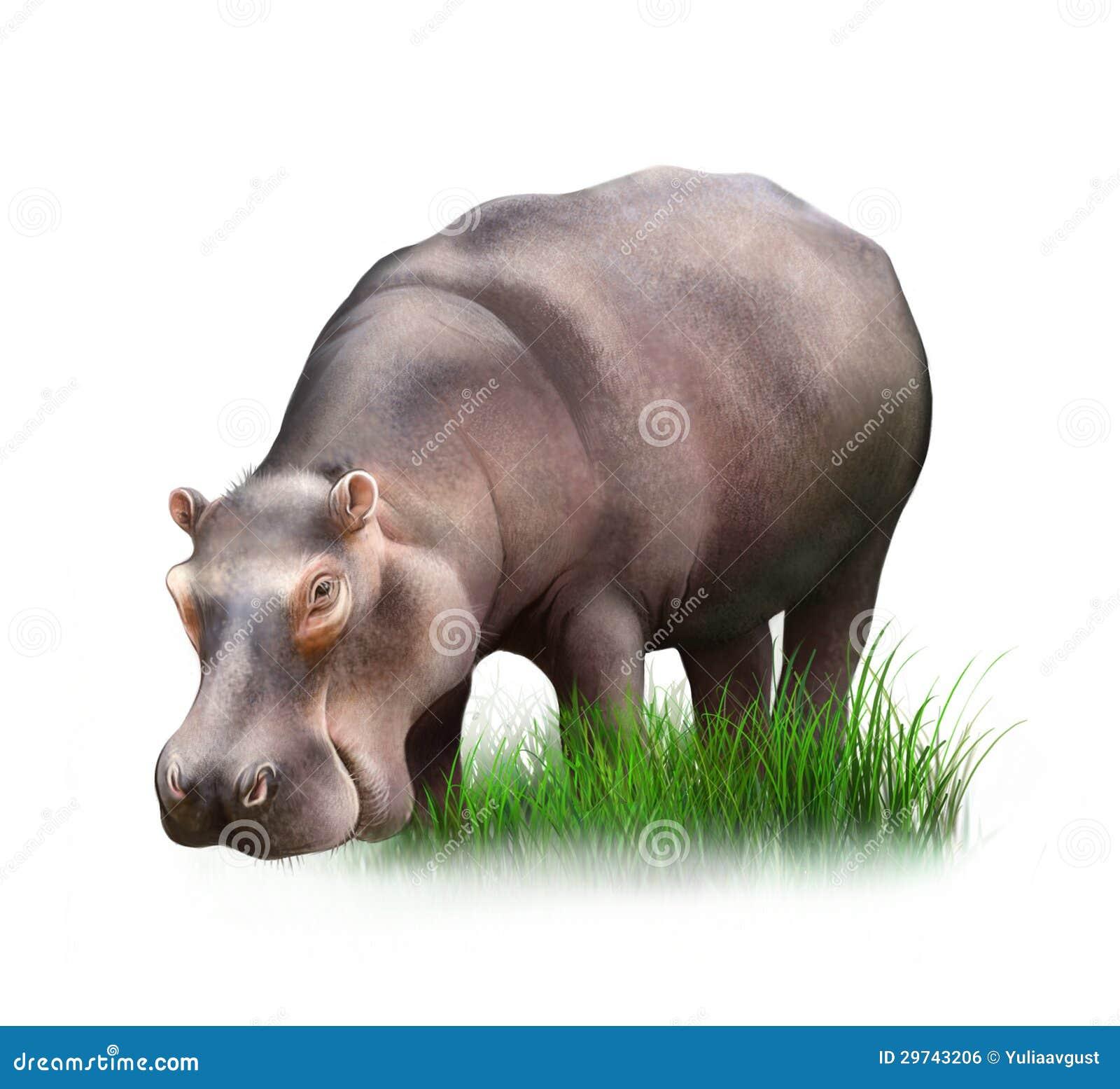 view of huge hippopotamus eating grass royalty free stock image image 29743206 vector fogging equipment vectorfog