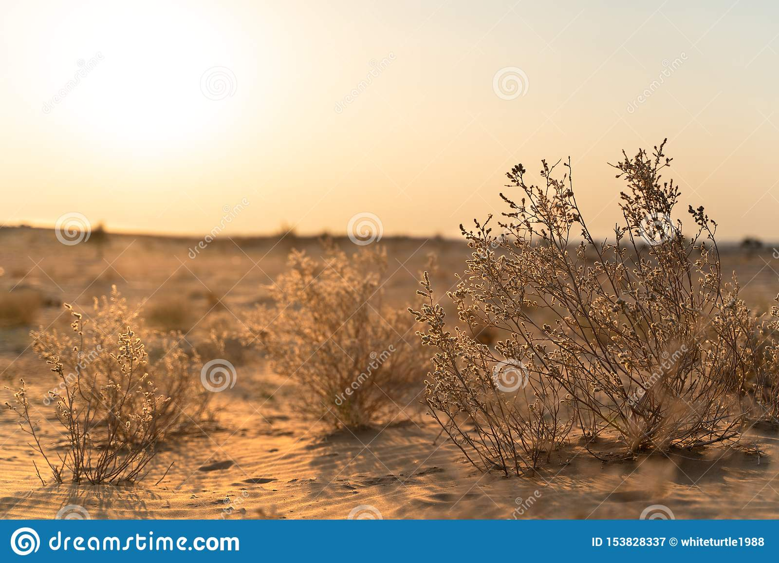 The view in indian desert