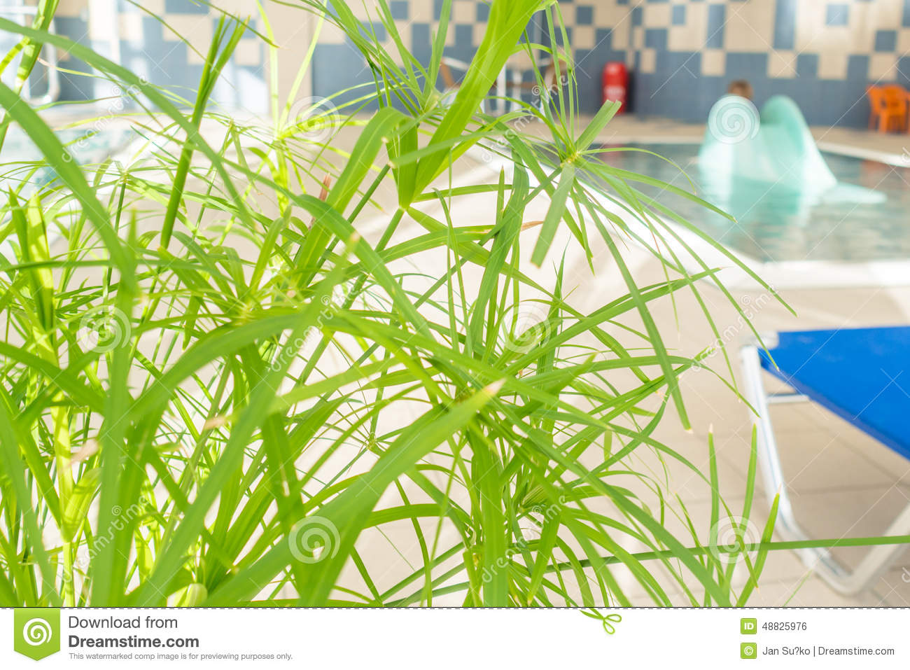 View of indoor baby pool stock photo image of basin for Indoor green plants images