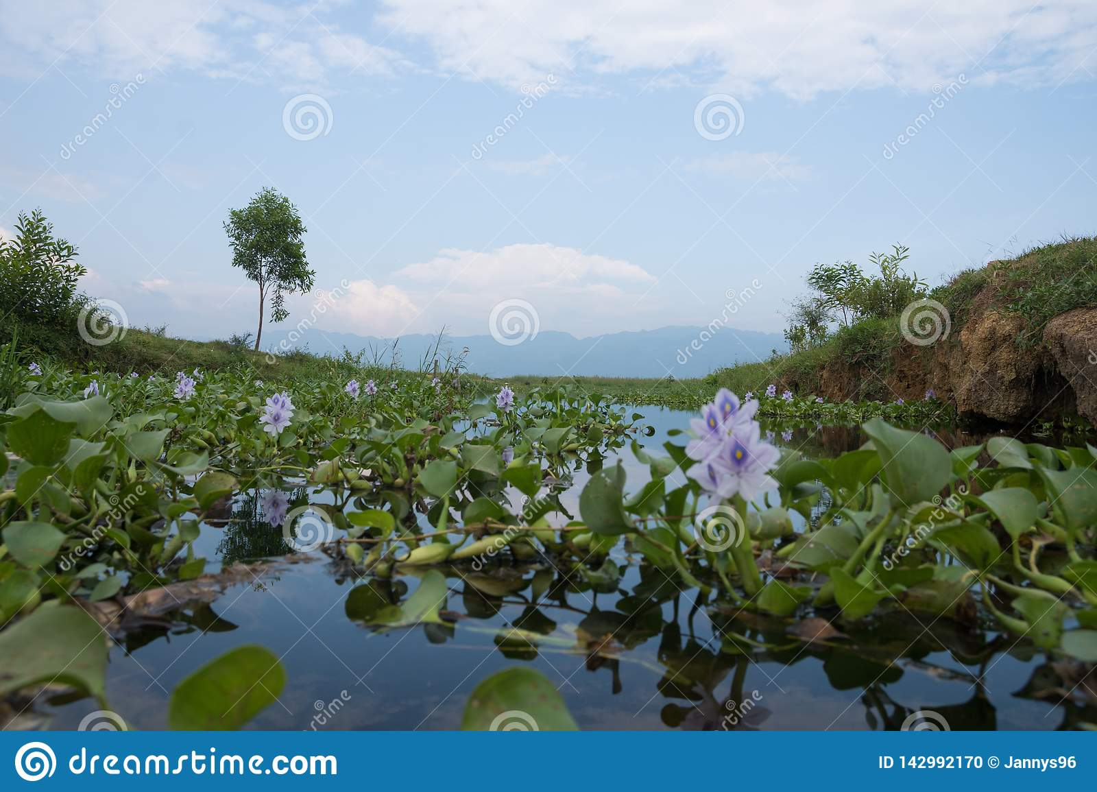 View on inle lake with purple flower seen from frog perspective in myanmar