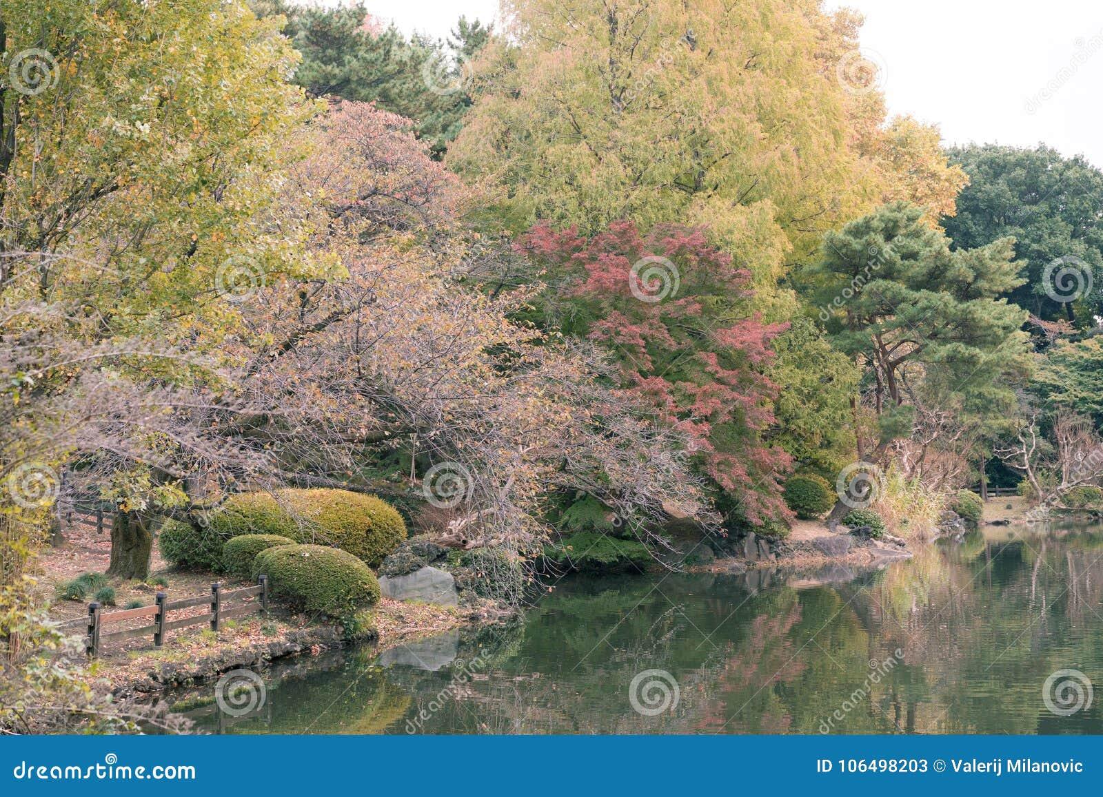 View of a lake and trees during autumn in Shinjuku Gyoen National Garden, Tokyo, Japan.