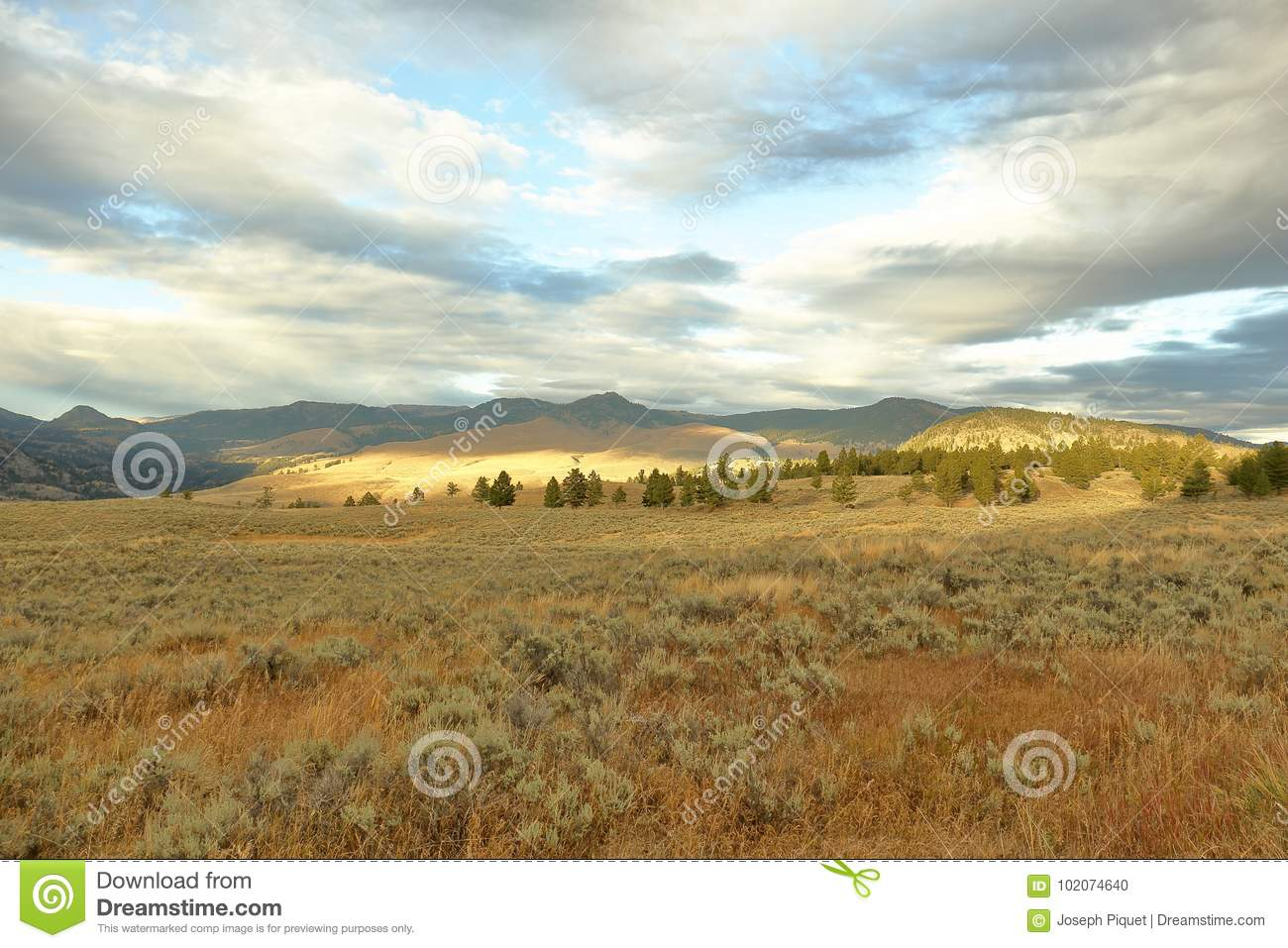 Yellowstone in September stock photo  Image of field - 102074640