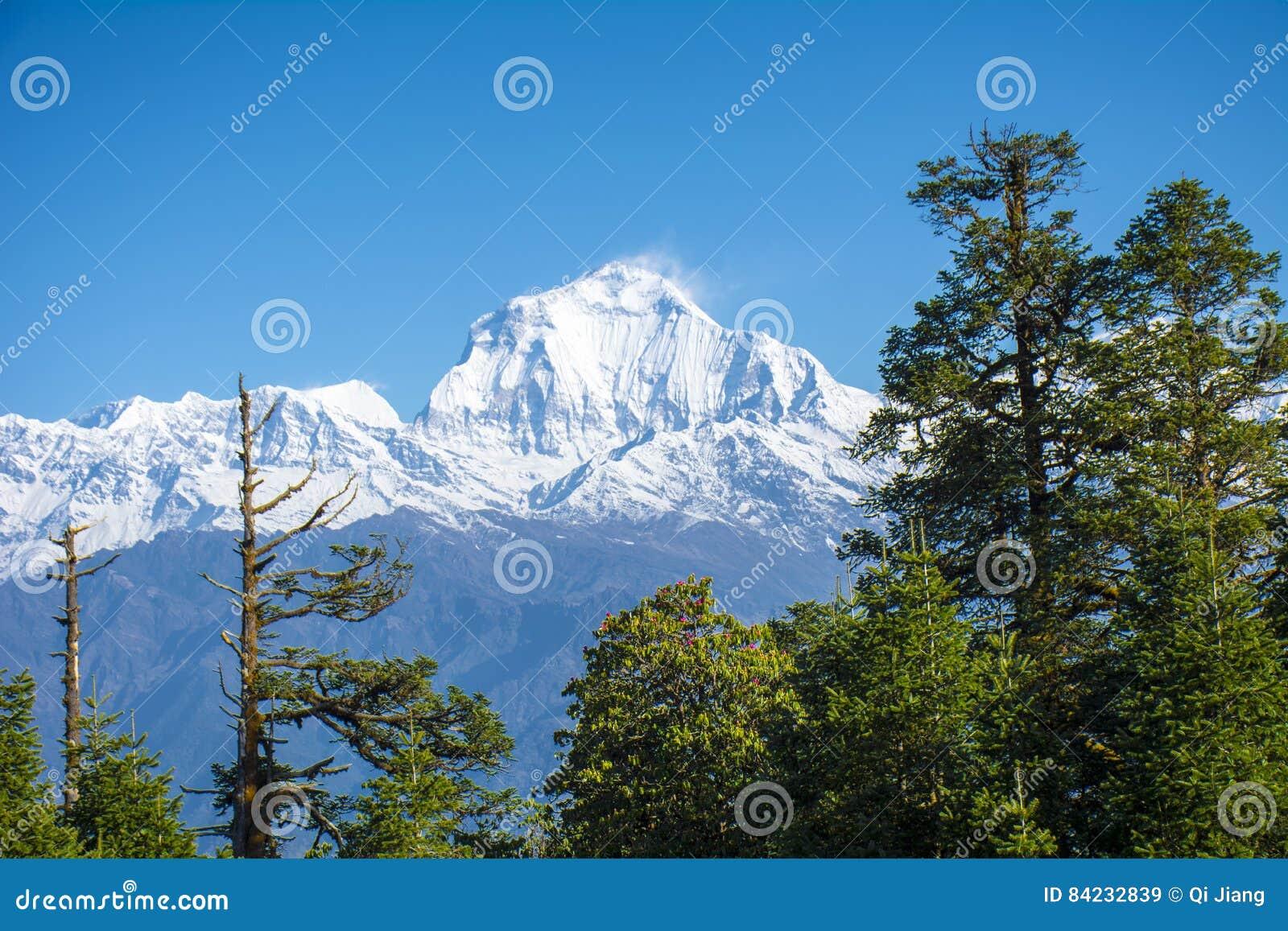 View of Mt. Dhaulagiri