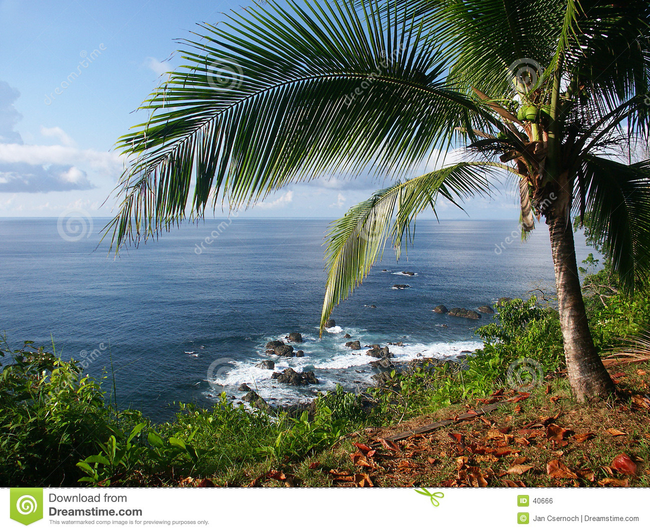 View of the ocean with palmtree