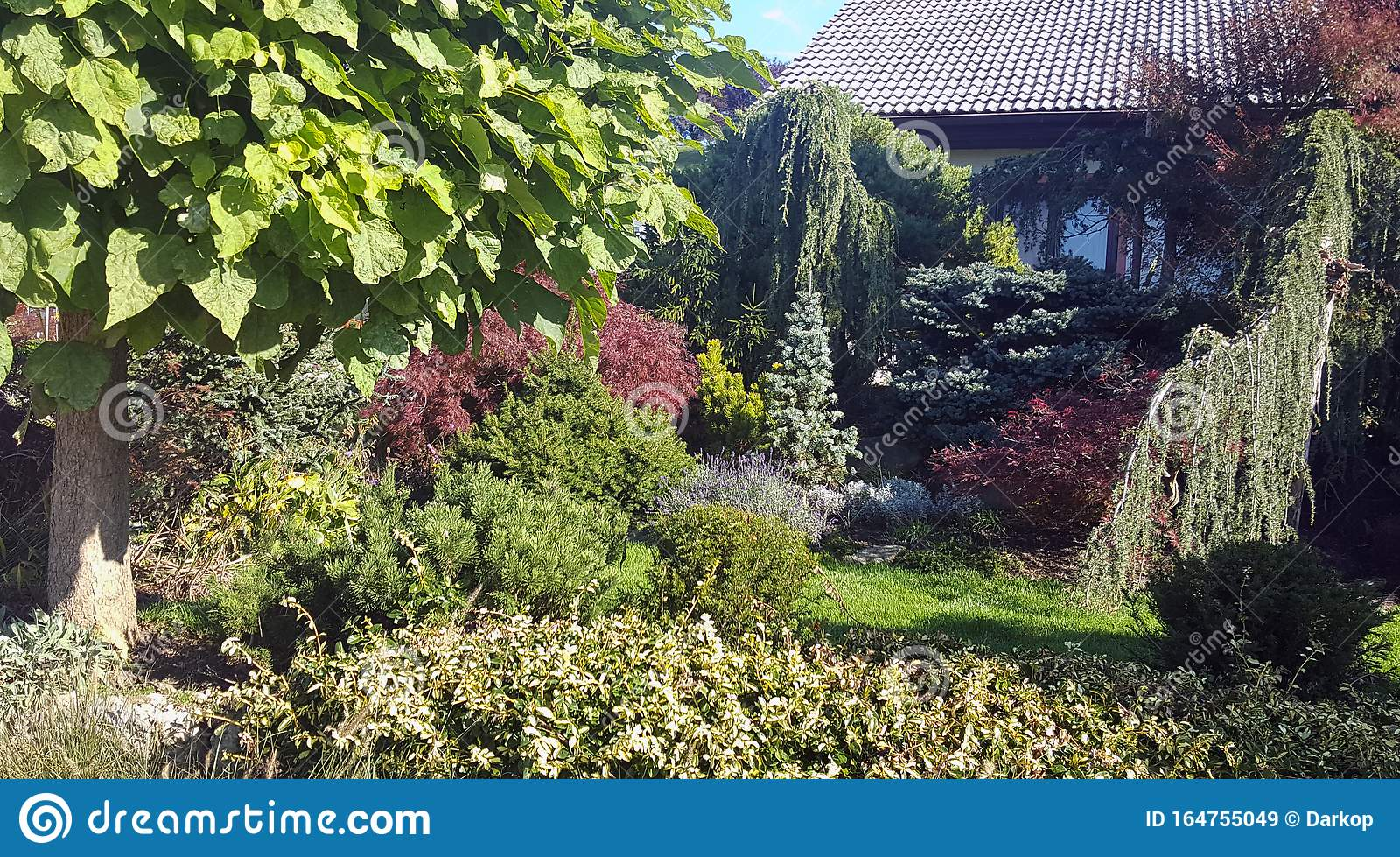 Ornamental Garden Planted With Low Growing Conifers And Trees