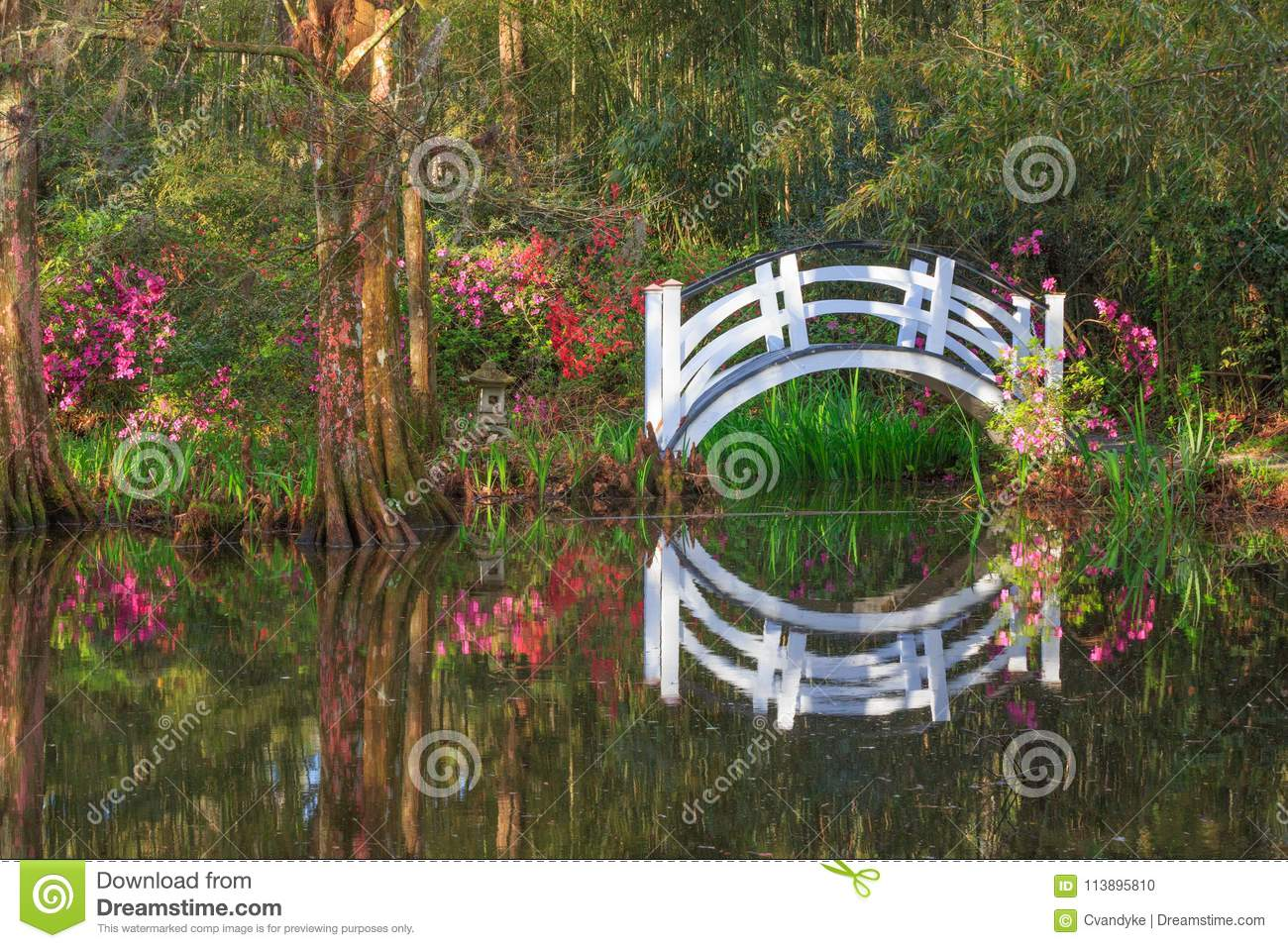 Charleston SC White Bridge And Spring Azaleas Stock Photo - Image of ...