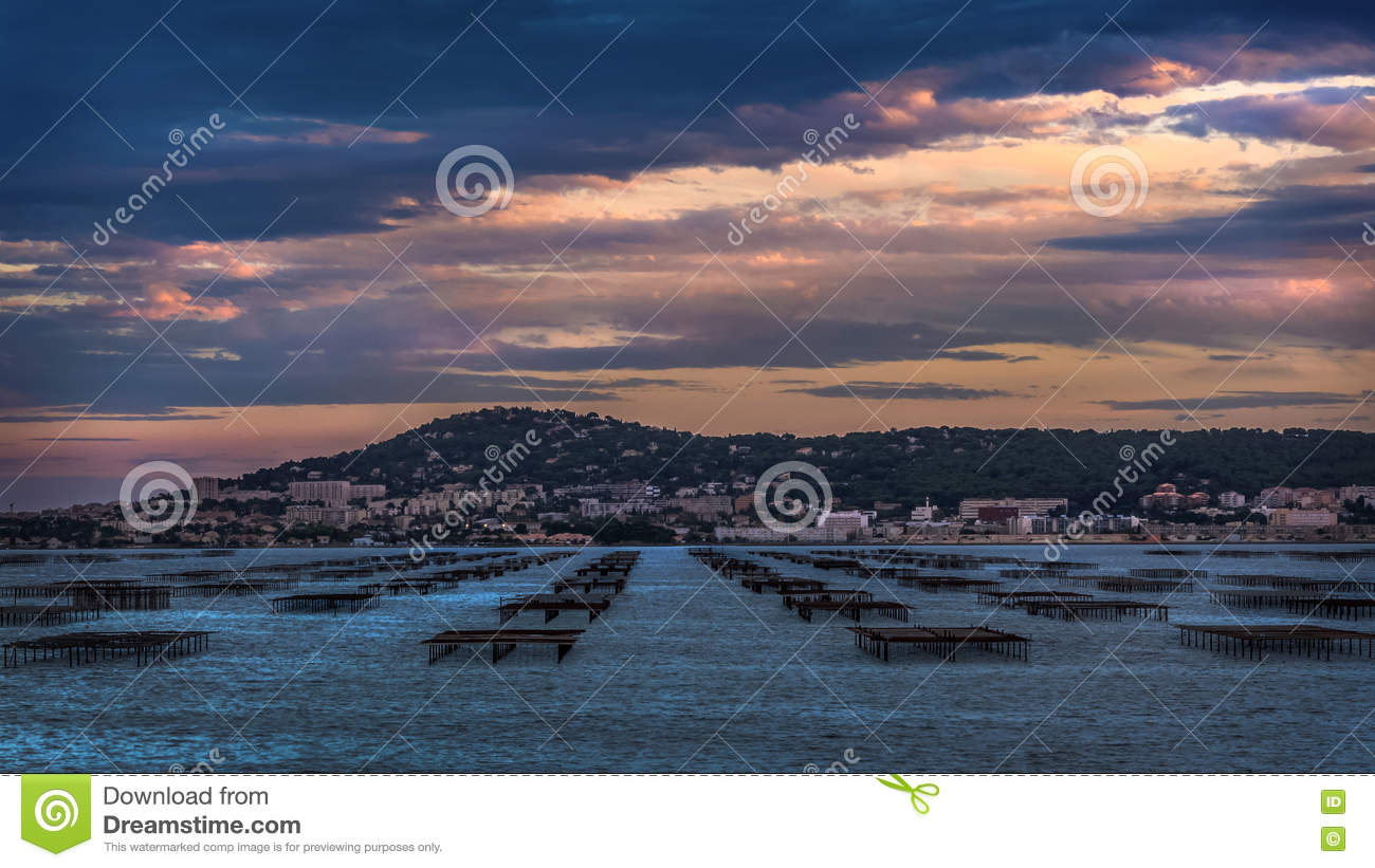 View over oyster tables in Etang de Thau Bouzigues France