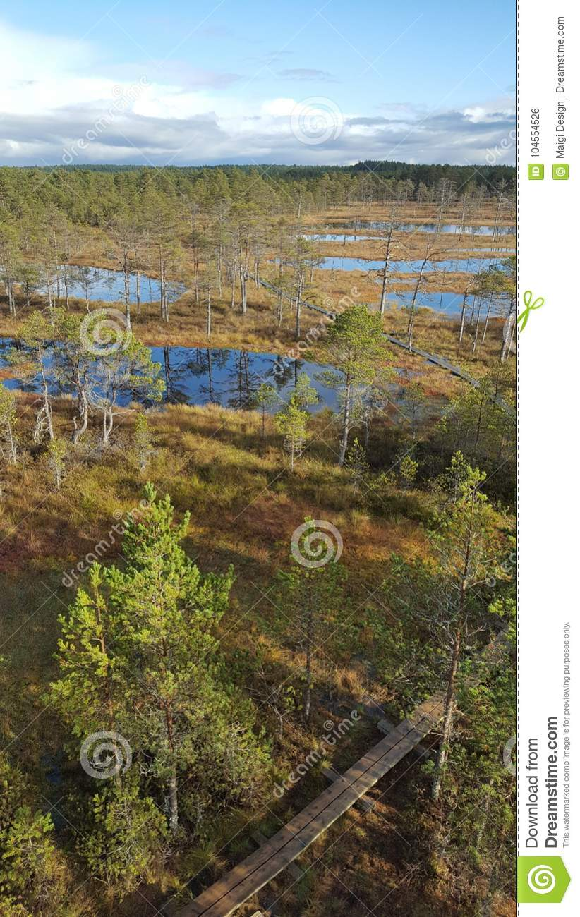 Download Wetland Landscape stock photo. Image of blue, bogwalk - 104554526