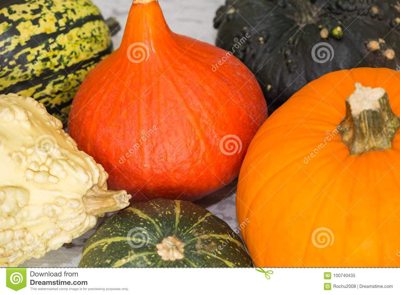 View Of The Pumpkins Different Types Good For Eat And Decorative
