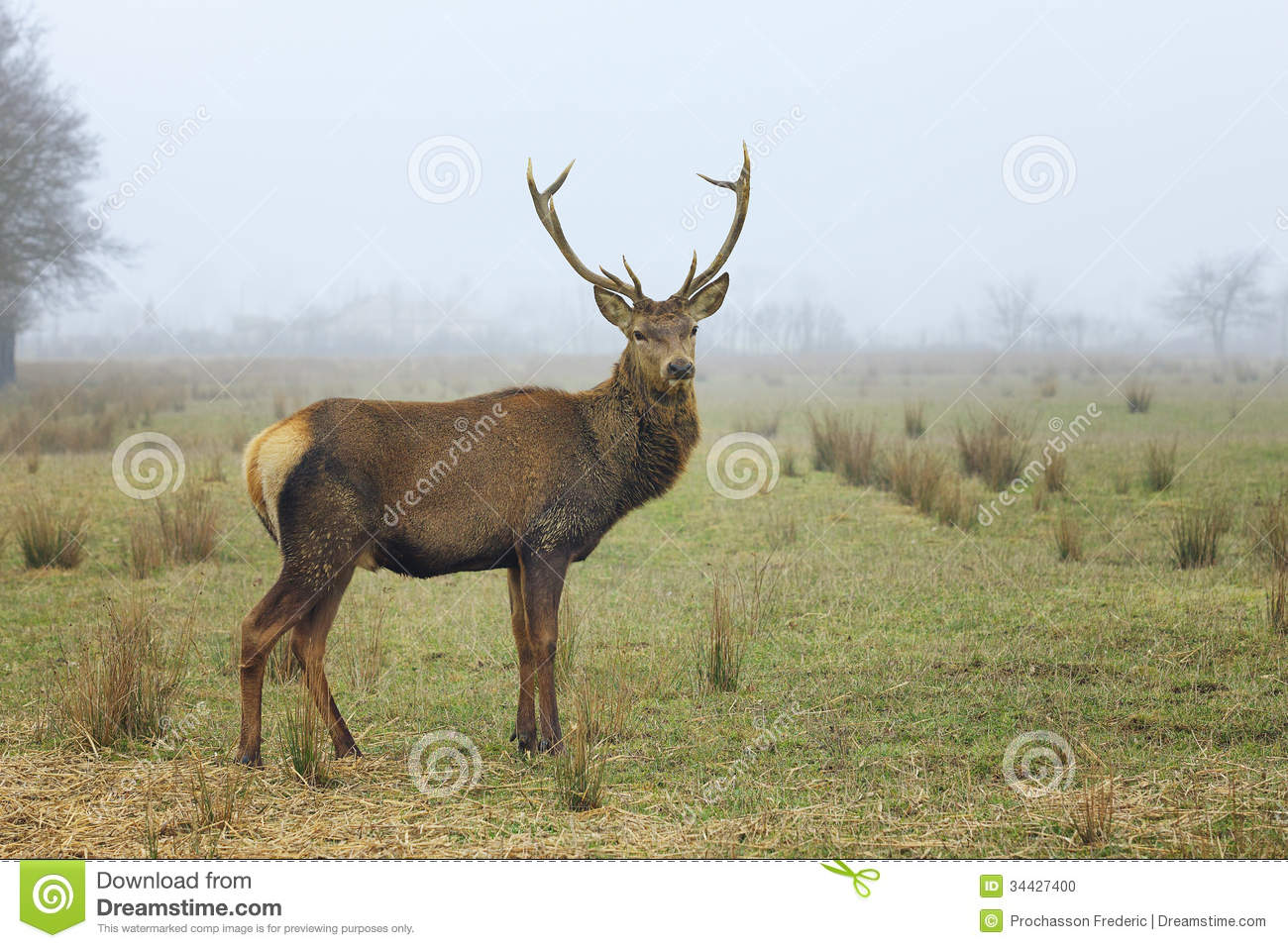 Landscaping Ties Red Deer : View of red deer stock photo image