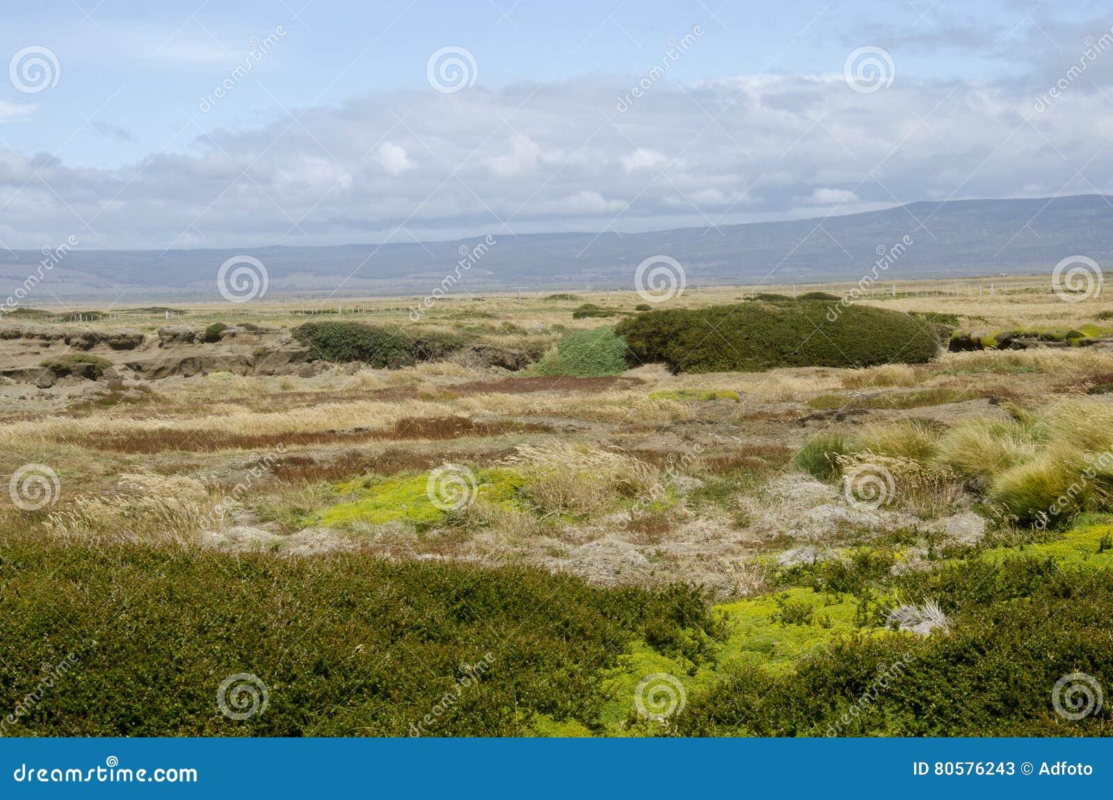 View of Seno Otway - Patagonia - Chile