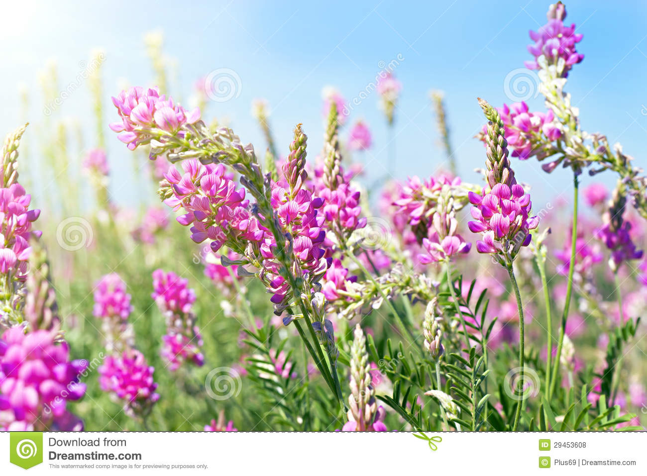 View The Sky Through The Green Grass With Pink Flowers Stock Photo