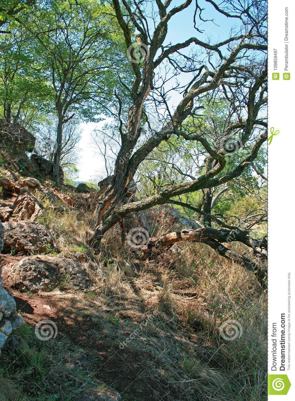 SLANTED TREE GROWING ON A SLOPE