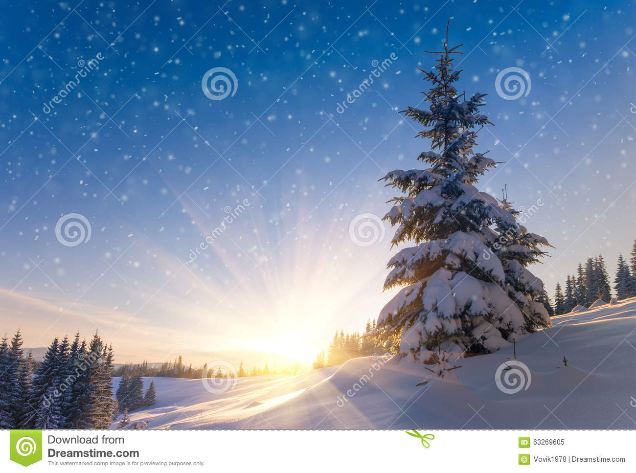 beautiful winter landscape in mountains view of snow covered conifer trees and snow flakes at sunrise merry christmass or new years background
