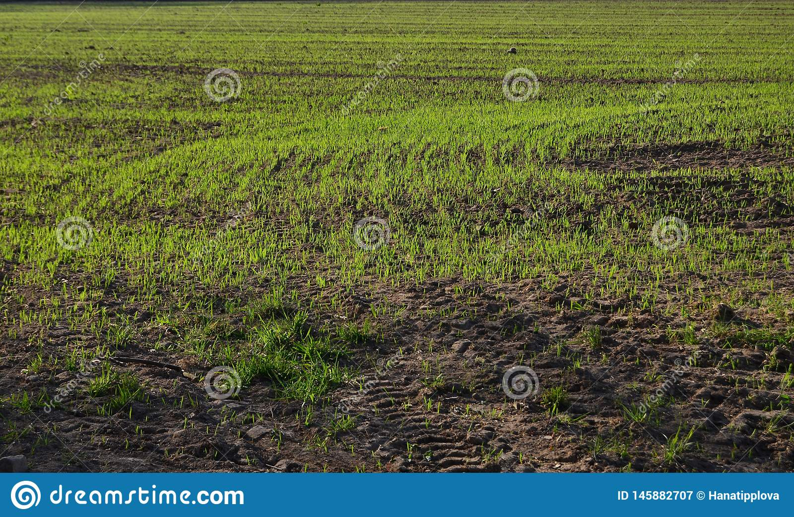 View sown fields , southern Bohemia