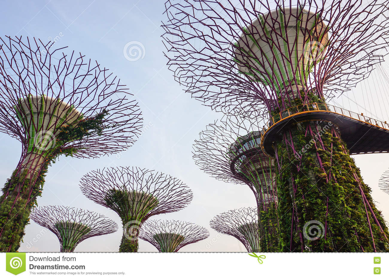 Download View Of Supertrees At Marina Sand Gardens In Singapore Editorial  Stock Photo   Image Of