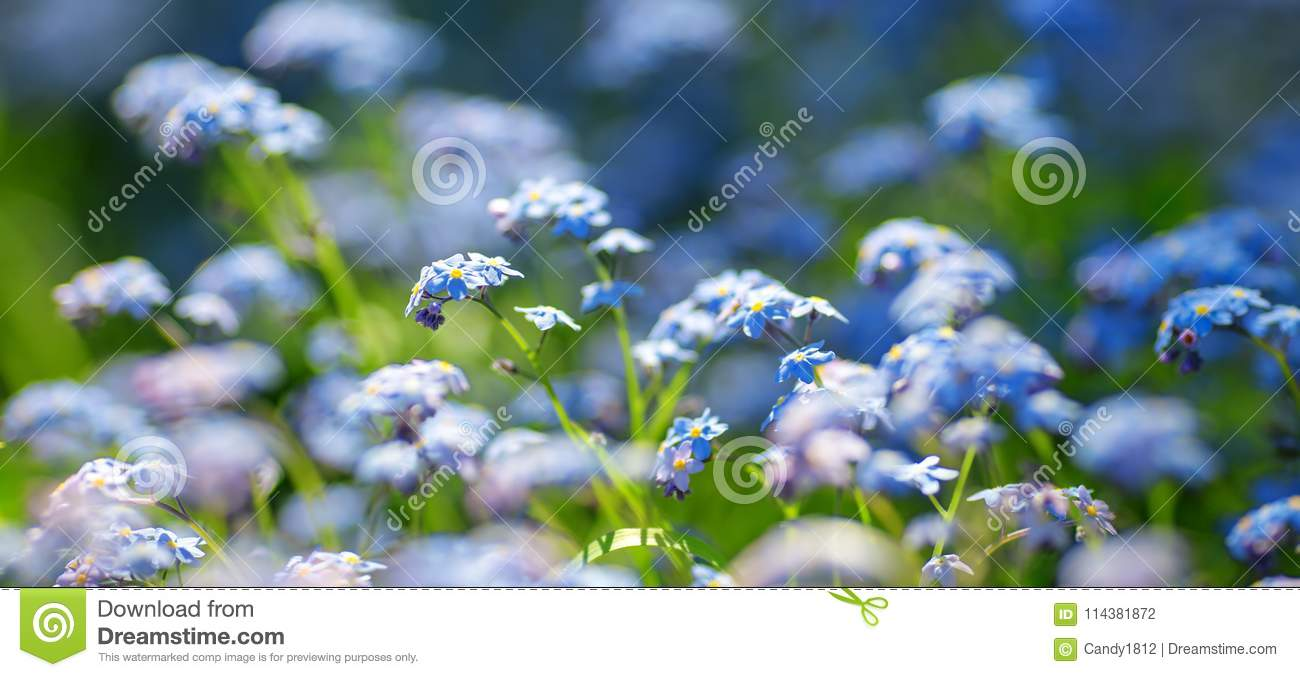 View To Blue Spring Flowers In The Park Stock Photo Image Of