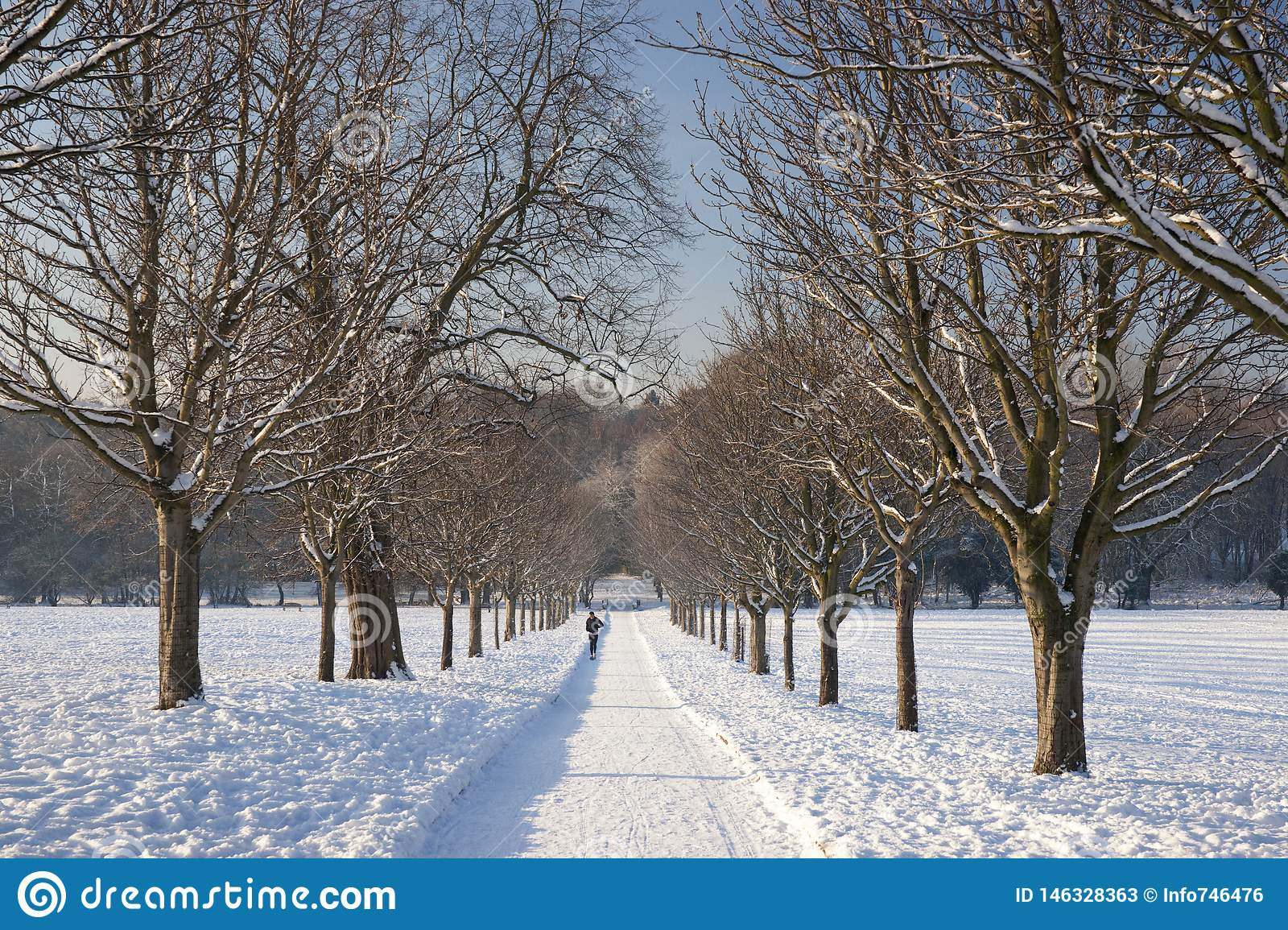 A view of the the tree avenue at the Elizabethan Wollaton Hall museum and gardens in the snow in winter in Nottingham,