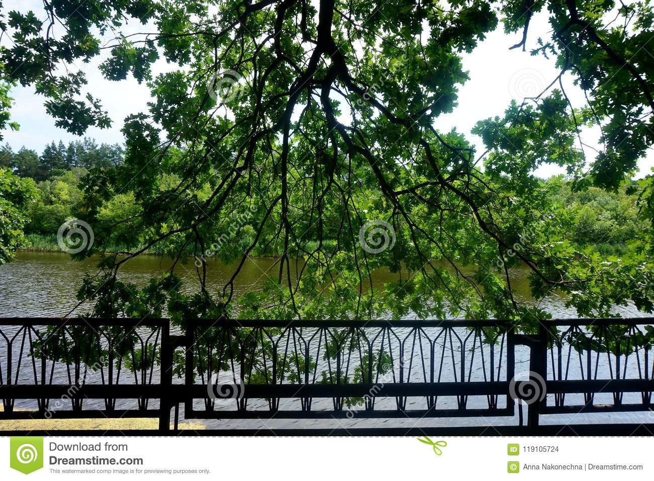 View of the tree branches on the embankment and the opposite shore.