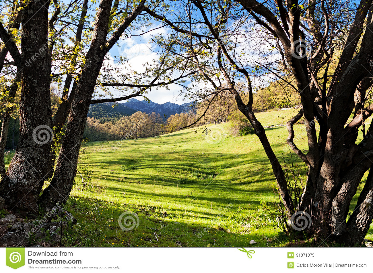 View Between The Trees In The Valley Stock Image Image
