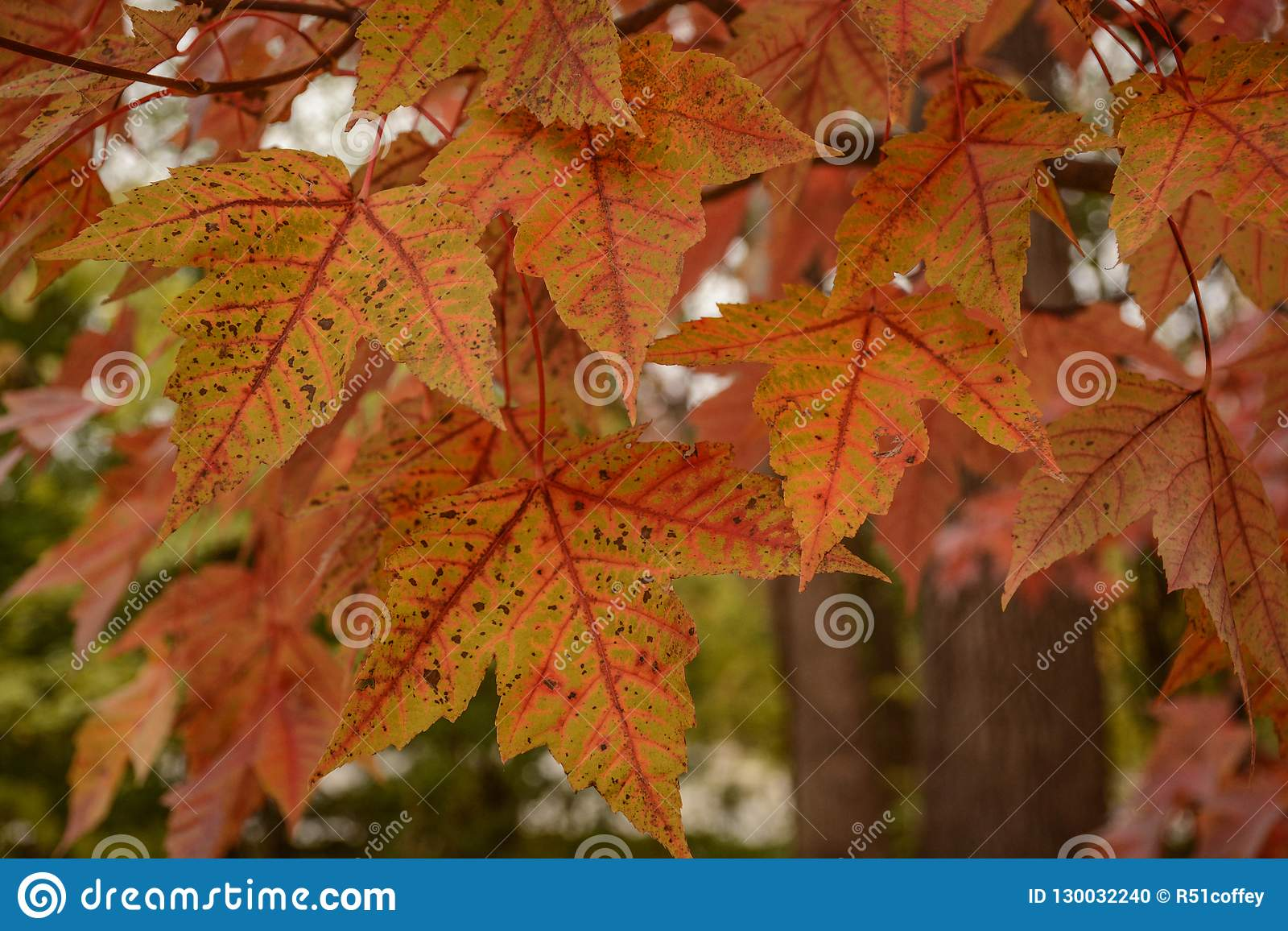 Beautiful Brightly Colored Fall Leaves