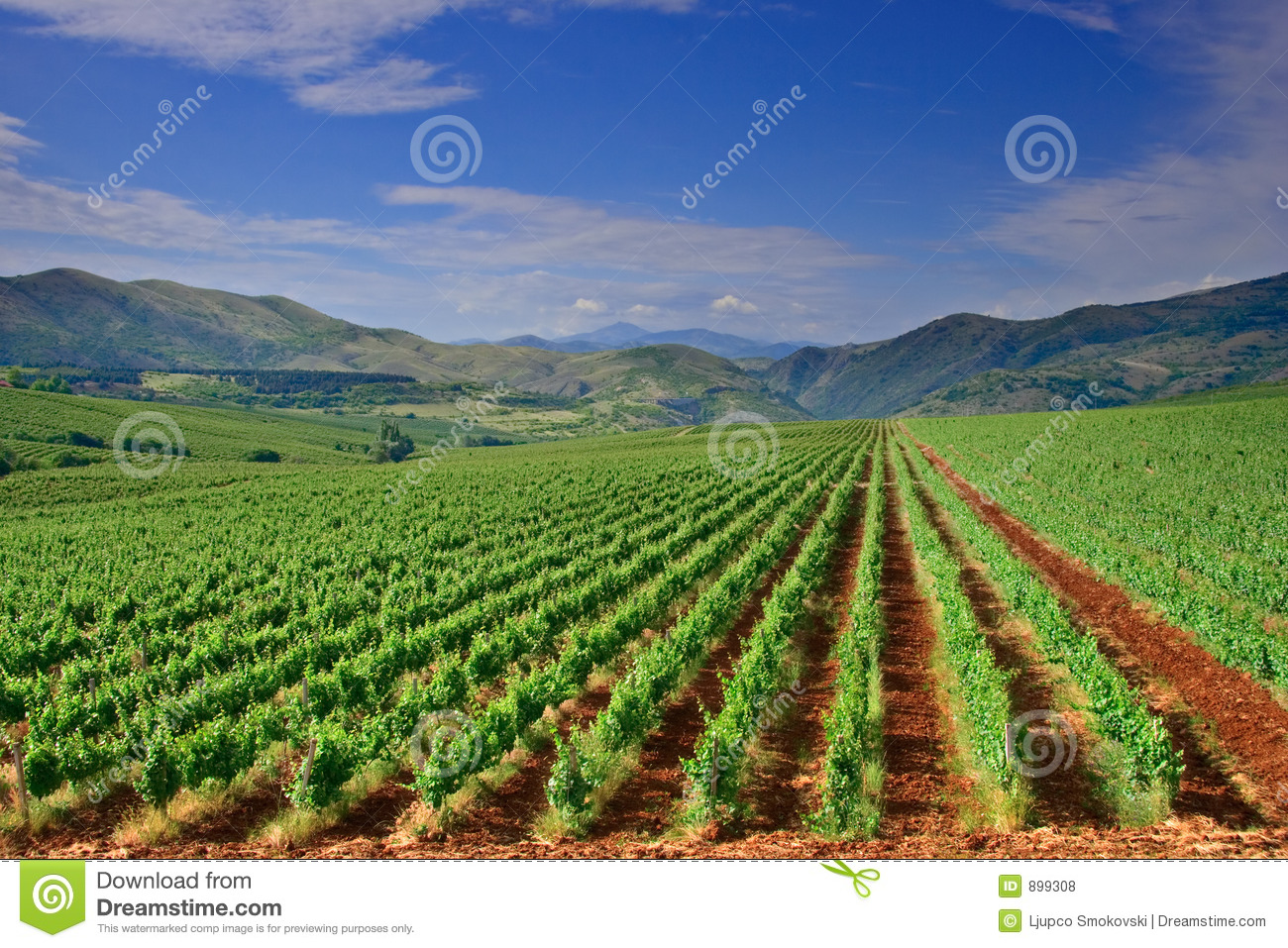 A view of a vineyard field in Macedonia