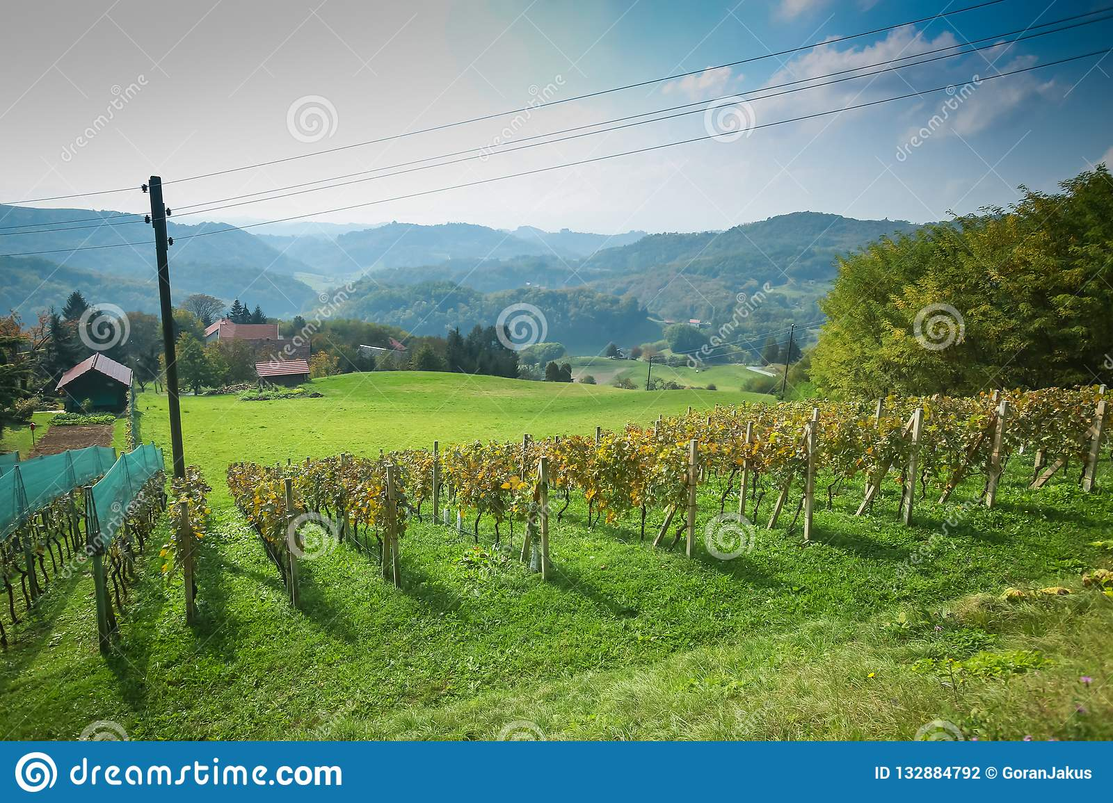 View of vineyard in Zagorje