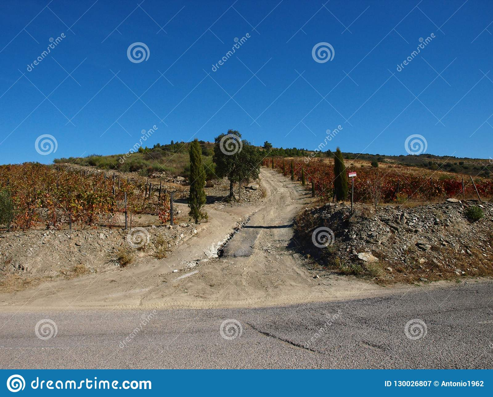 Douro river tipical wine fields road Portugal
