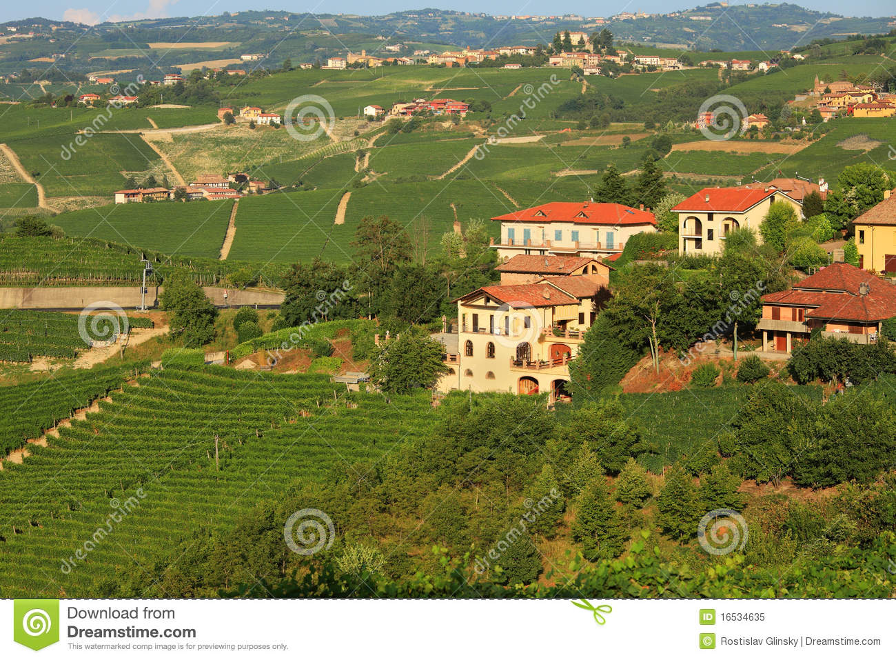 View On Vineyards In Northern Italy  Stock Image - Image of
