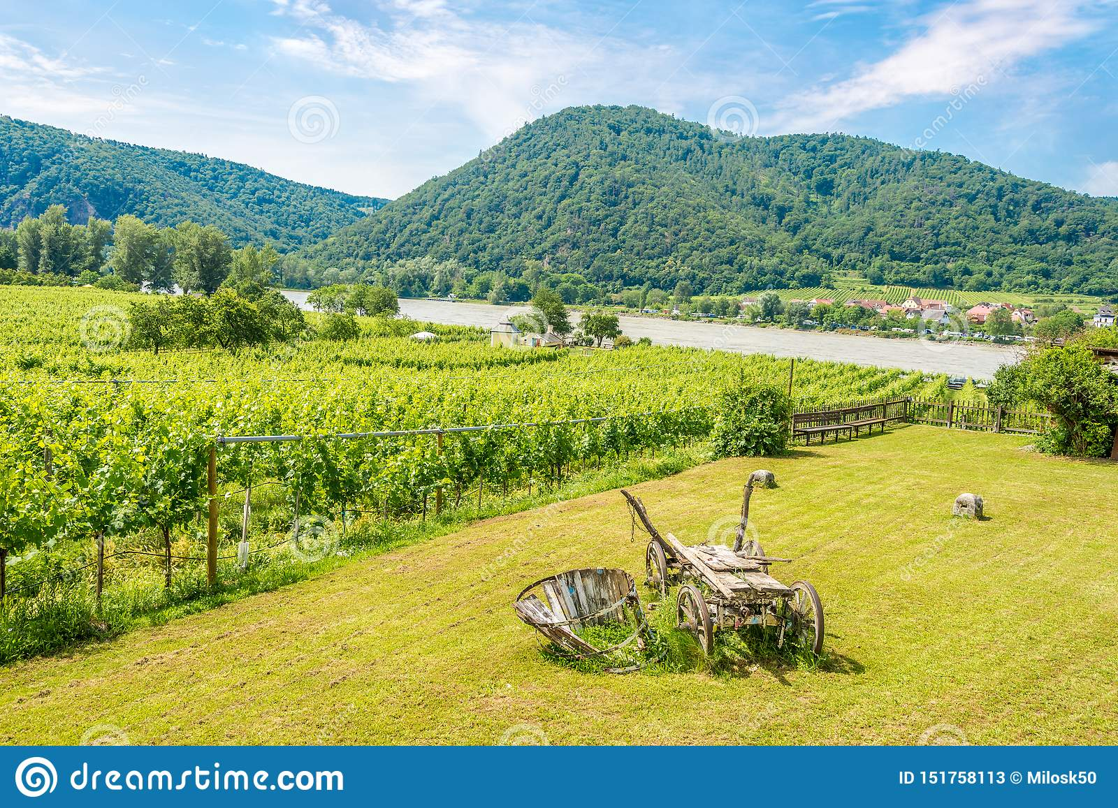 View at the vineyards and Danube river in Durnstein - Austria