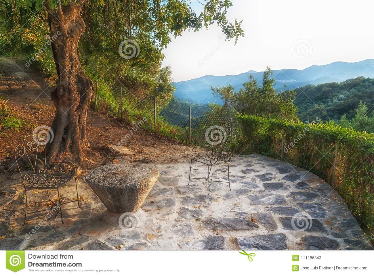 Viewpoint in the forest