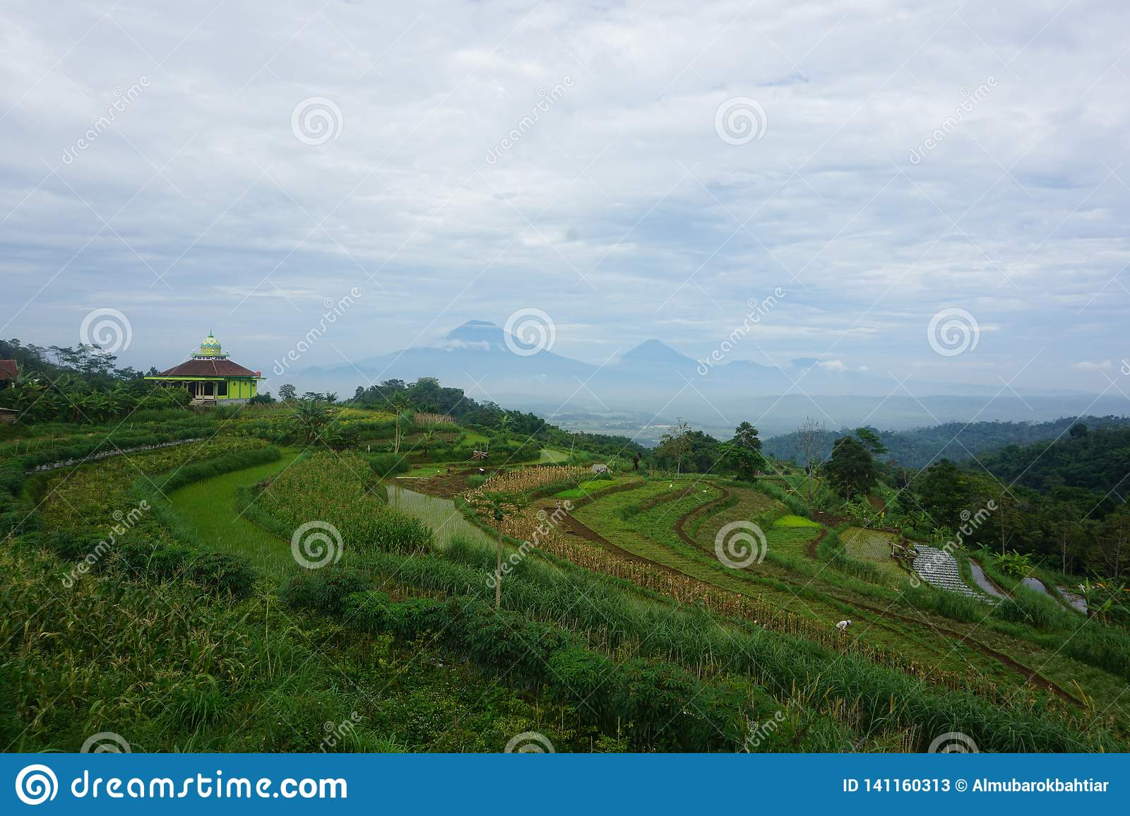 views of green rice fields on the hill