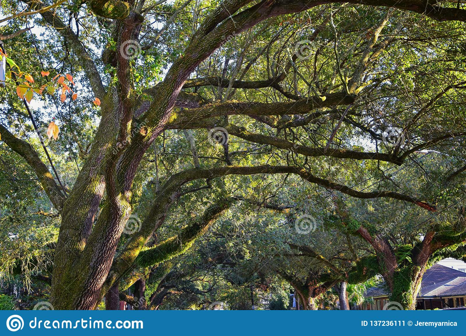 Views of trees and unique nature aspects surrounding New Orleans, including reflecting pools in cemeteries and the Garden District