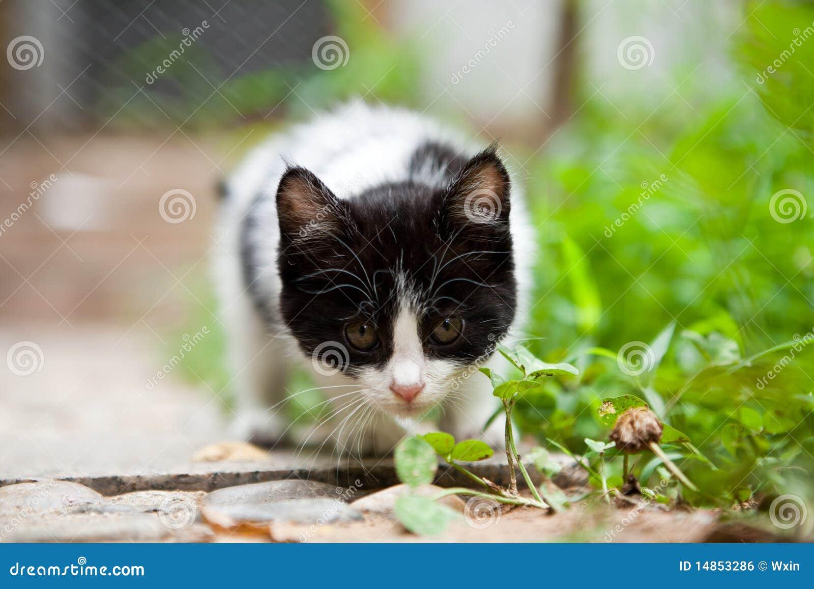Vigilance cat