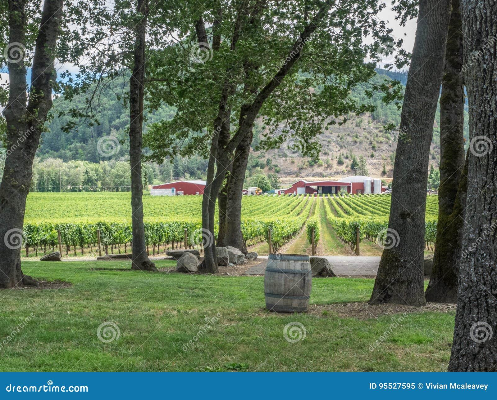Vigna e cantina nella zona rurale
