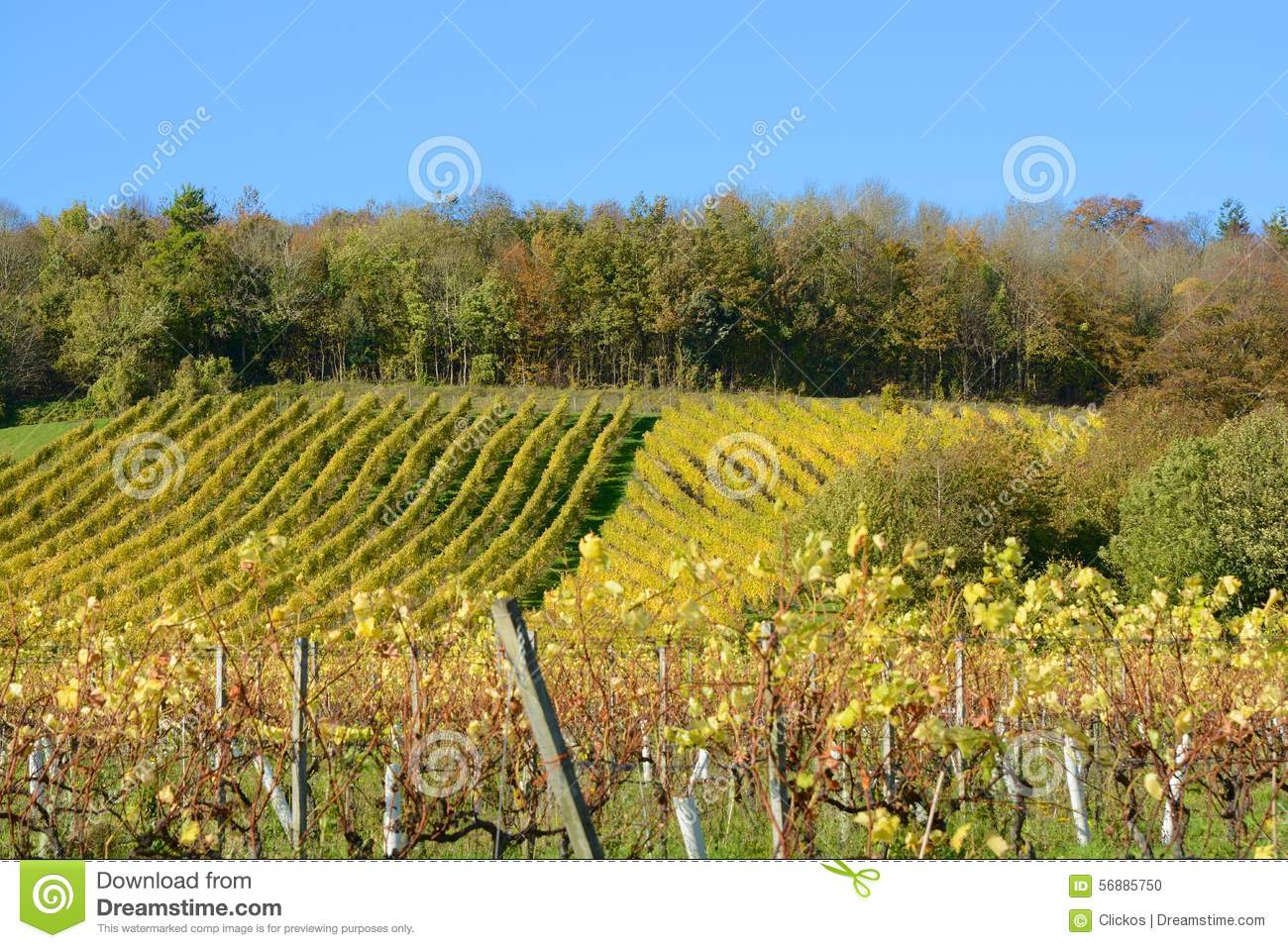 Vigna inglese in autunno
