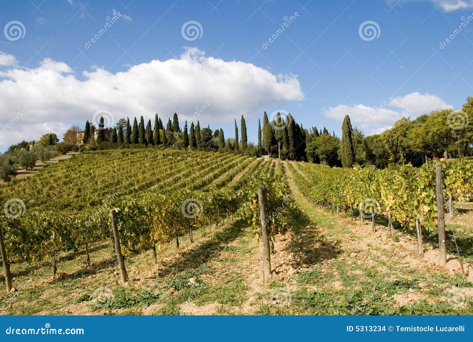 Download Vigna italiana fotografia stock. Immagine di campagna - 5313234