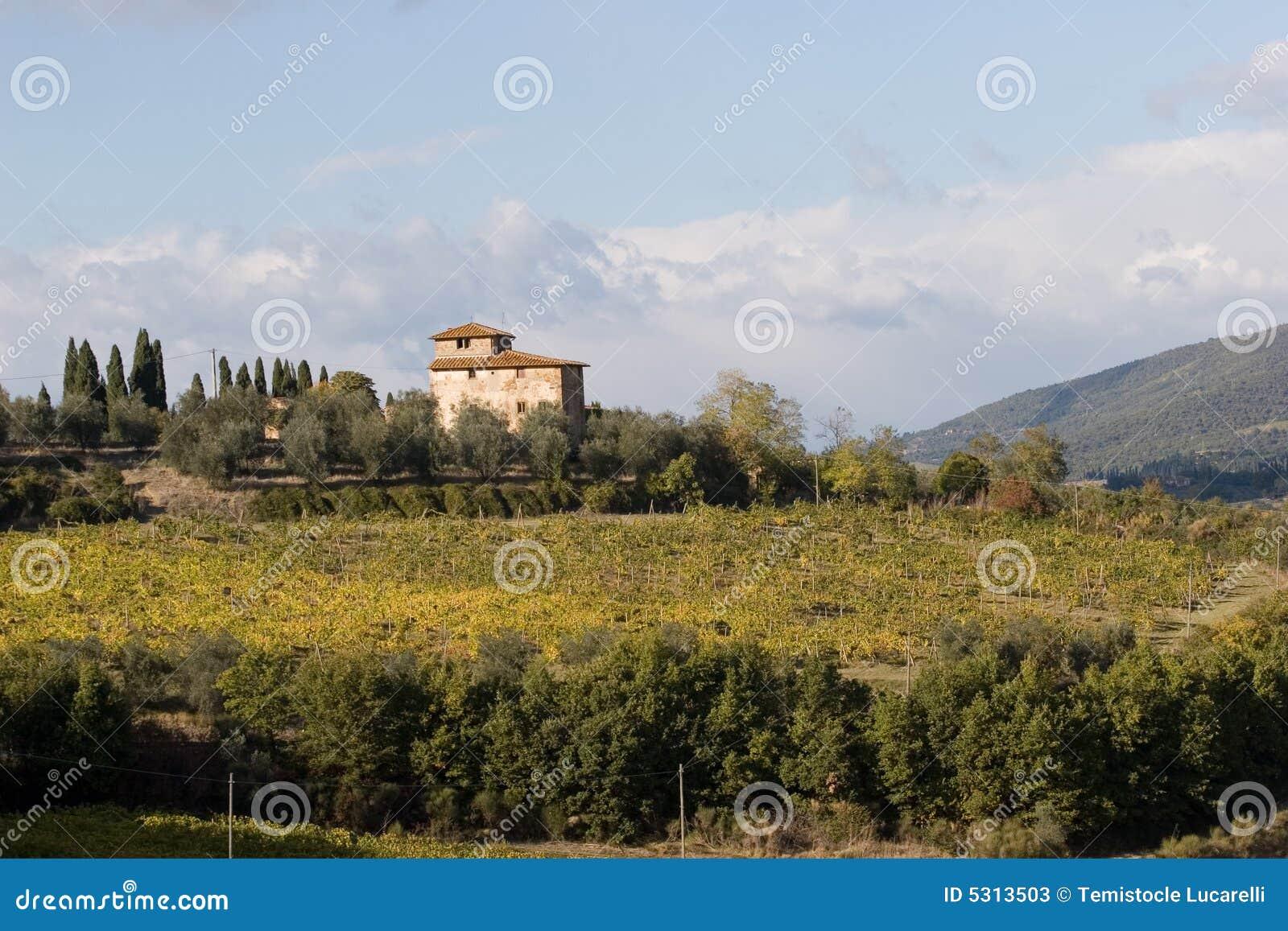 Download Vigna italiana immagine stock. Immagine di tuscany, vigna - 5313503