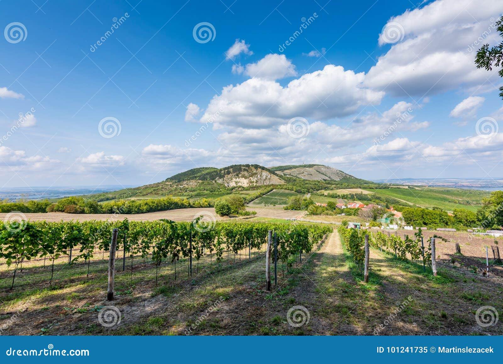 Vigna a Palava alla repubblica Ceca, al parco nazionale, al vino ed all agricoltura, cielo di estate con le nuvole bianche