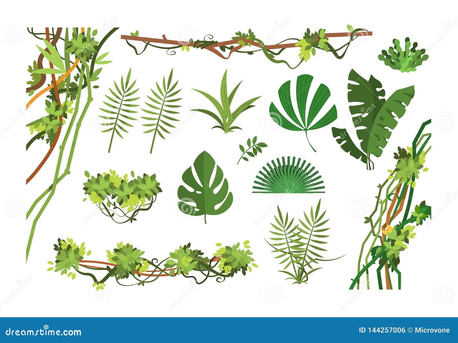 Vigne De Jungle Feuilles De Forêt Tropicale De Bande
