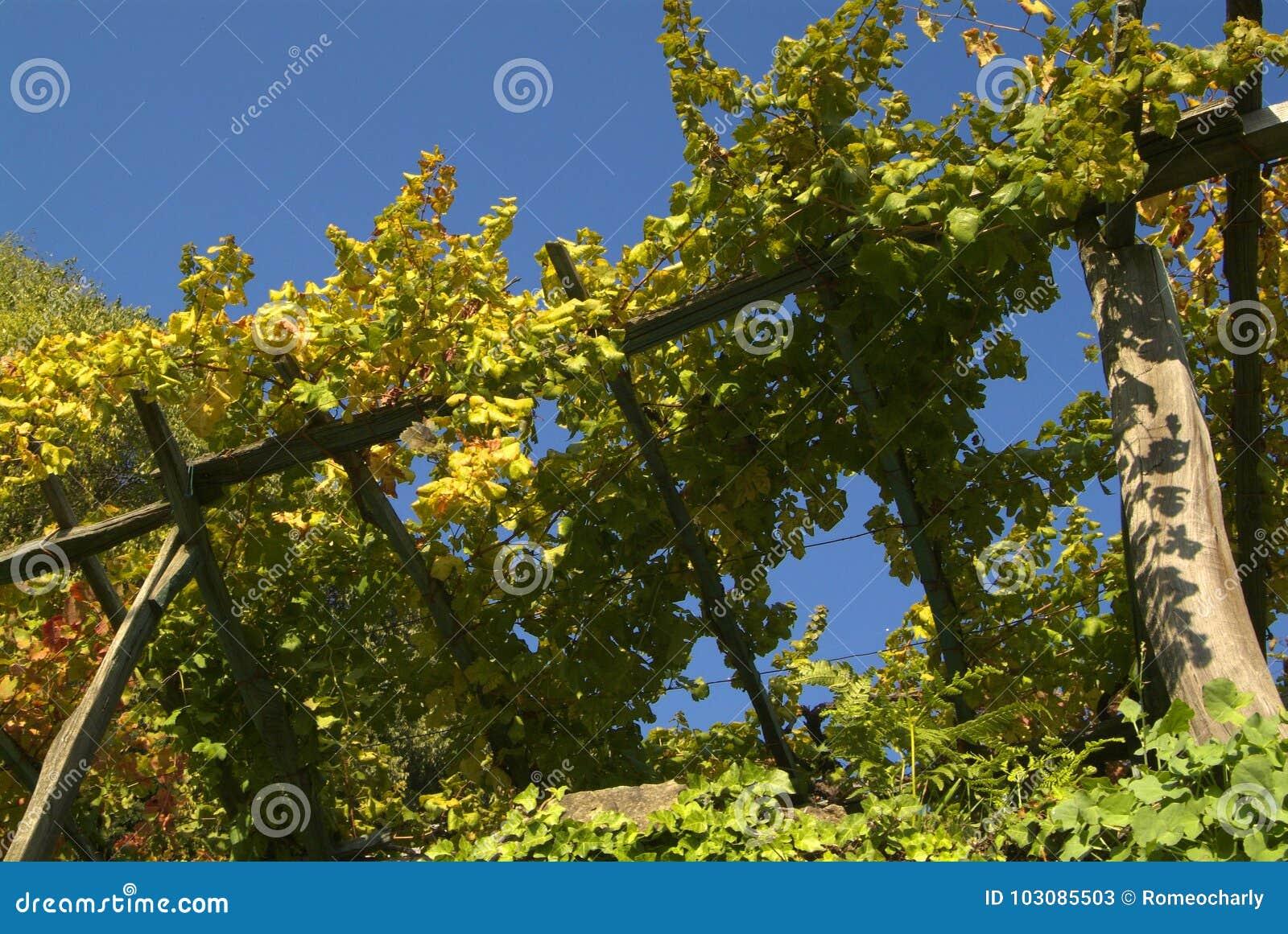 Vigne di Canavese - vicino al piccolo villaggio Cesnola, Italia
