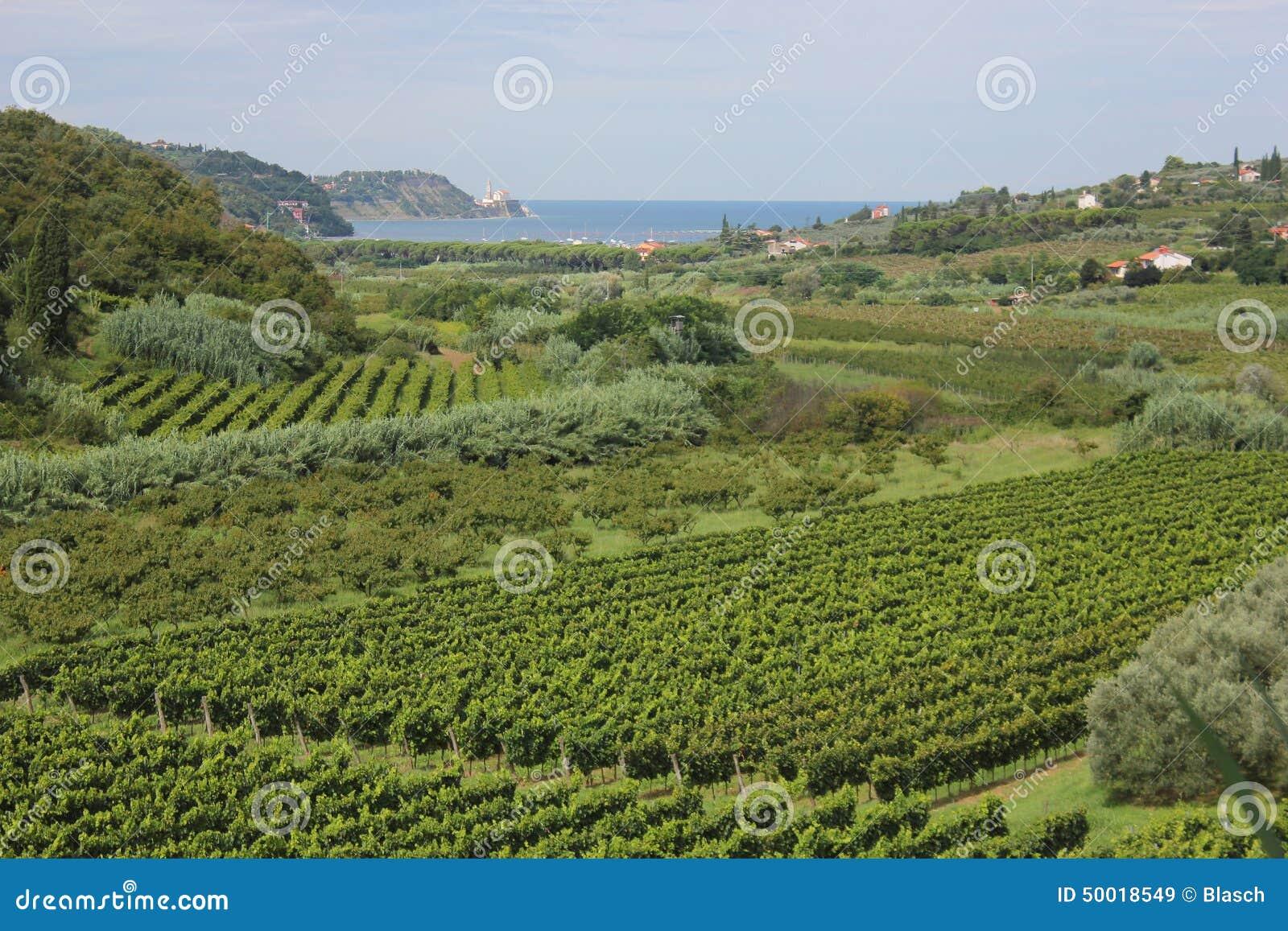 Vigne ed alberi da frutto slovenia immagine stock for Alberi da frutto prezzi