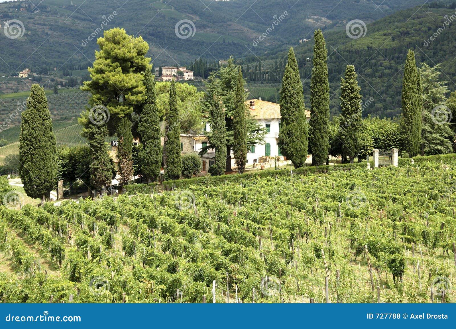 Vigne en Toscane
