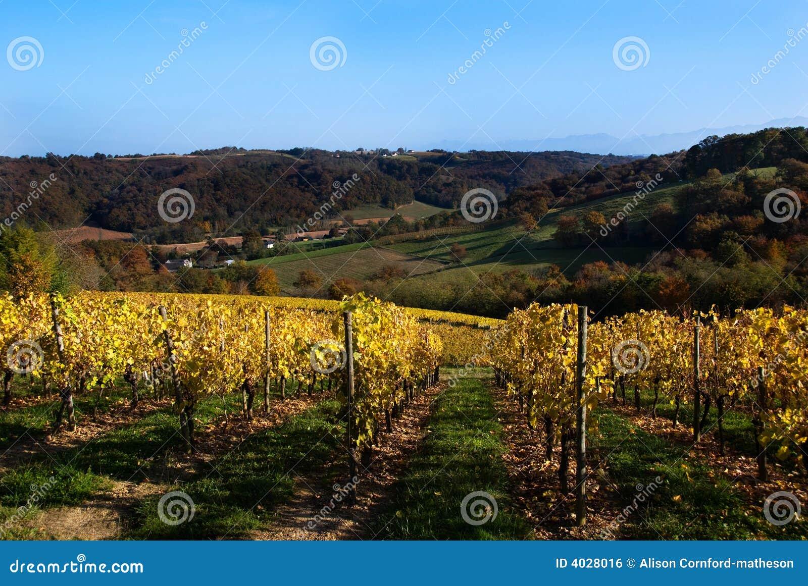 Vigne nel sud-ovest Francia