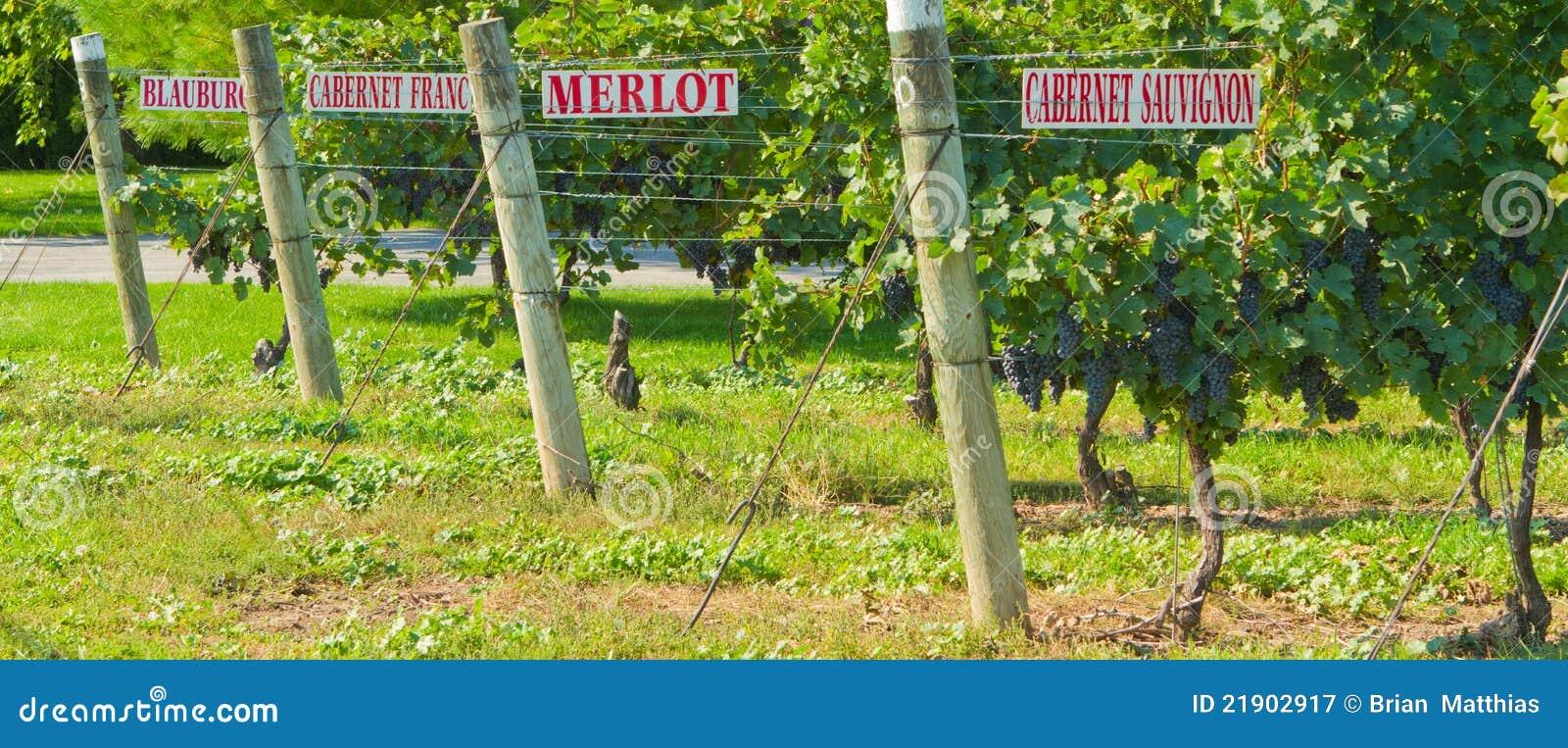 Vignes avec des signes