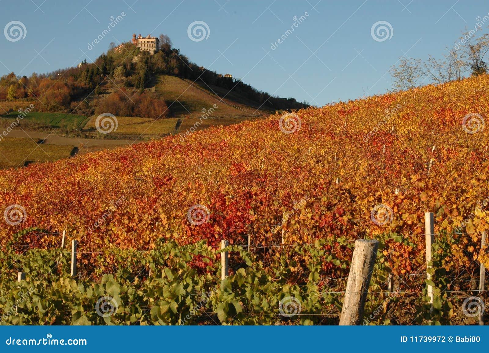 Vignes de Langhe avec le château