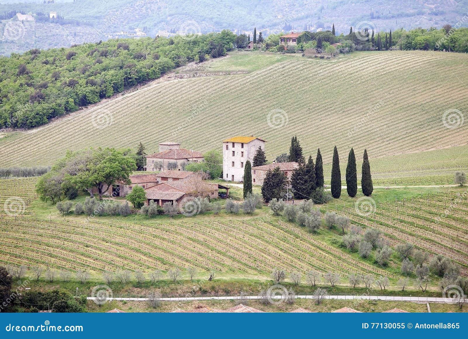 Vignes toscanes