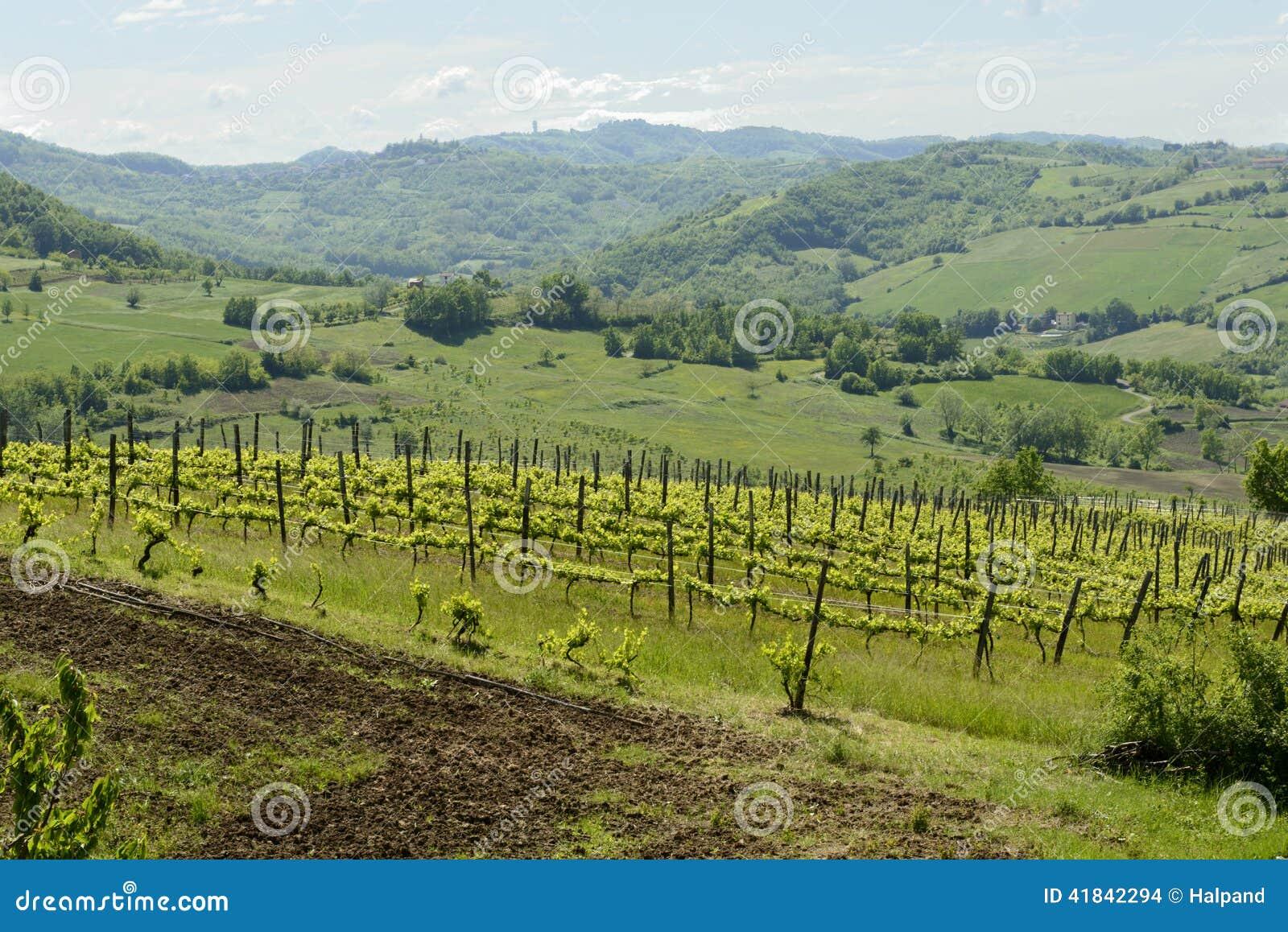 Vignoble accidenté en vallée de Curone, Piémont, Italie