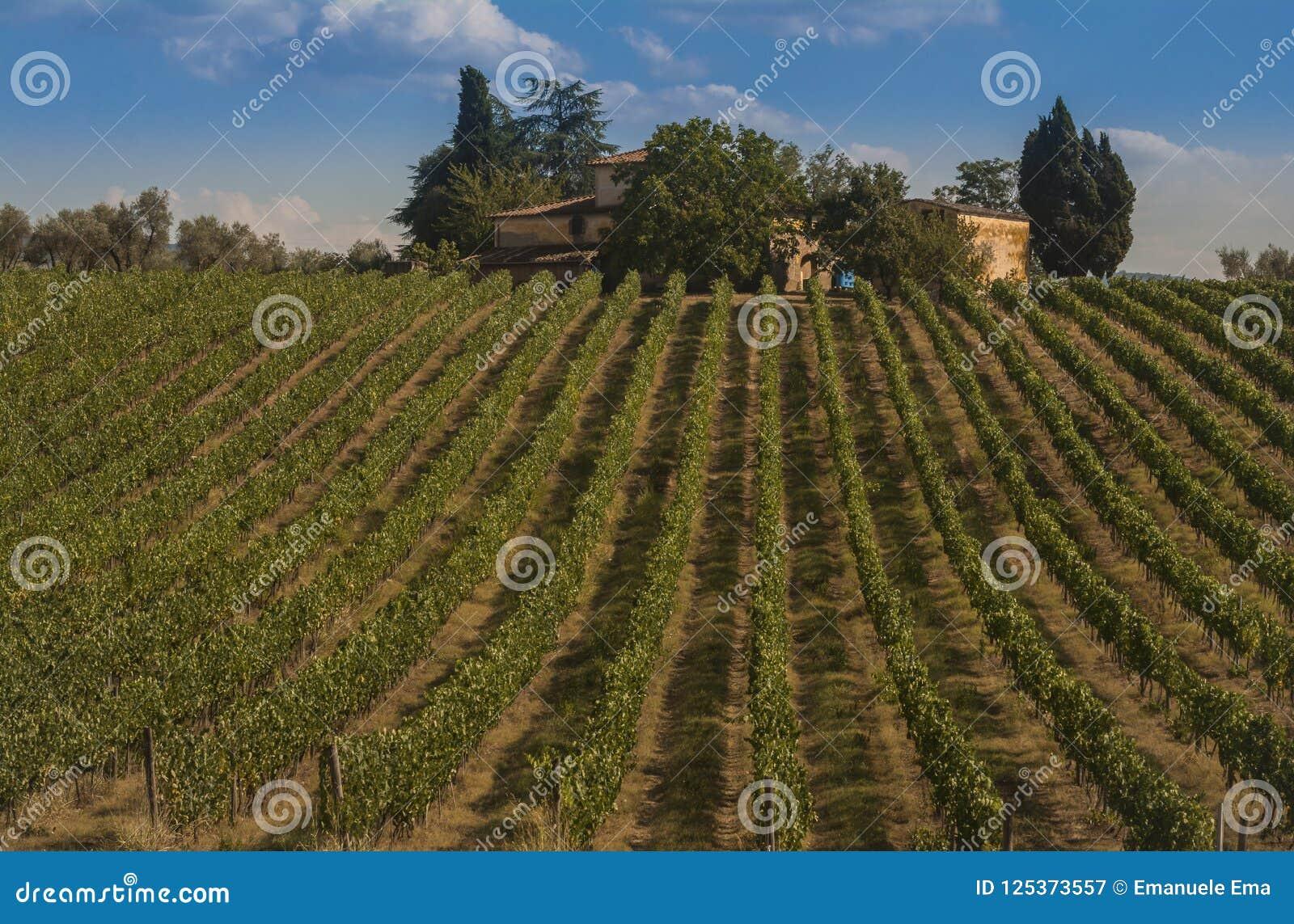 Vignoble dans les collines du chianti